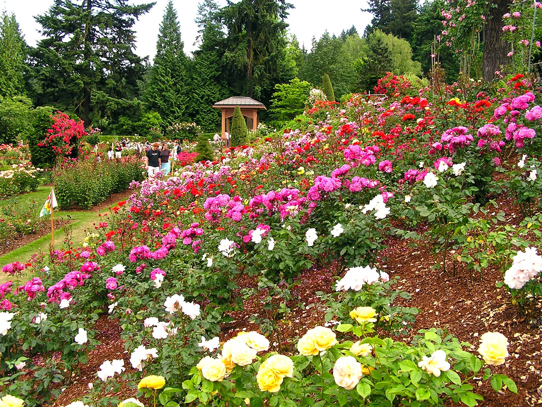 The International Rose Test Garden in Washington Park in Portland, Ore., was founded during World War I as a way to preserve plants that European hybridists feared might be wiped out in the bombings. This summer marks 100 years since the start of World War I in Europe in 1914.