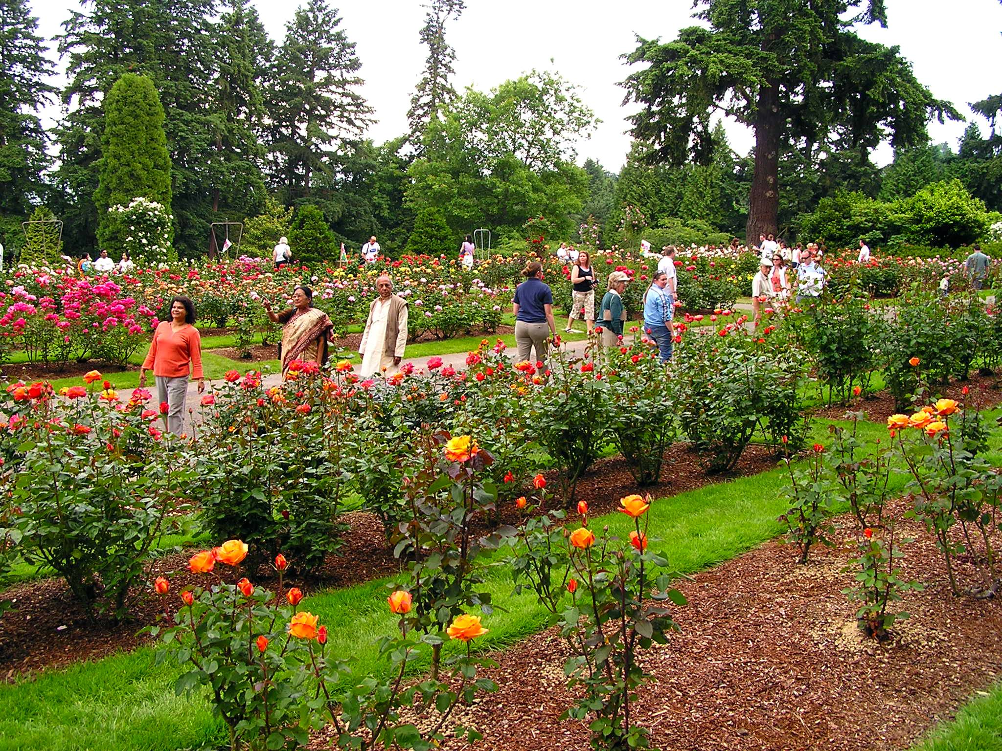 In early 1918, the International Rose Test Garden in Portland, Ore., began receiving plants from growers in England and Ireland, as well as Los Angeles, Washington and the Eastern United States.