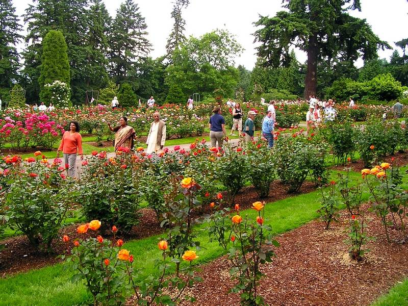 Portland rose garden\'s history lies in World War I