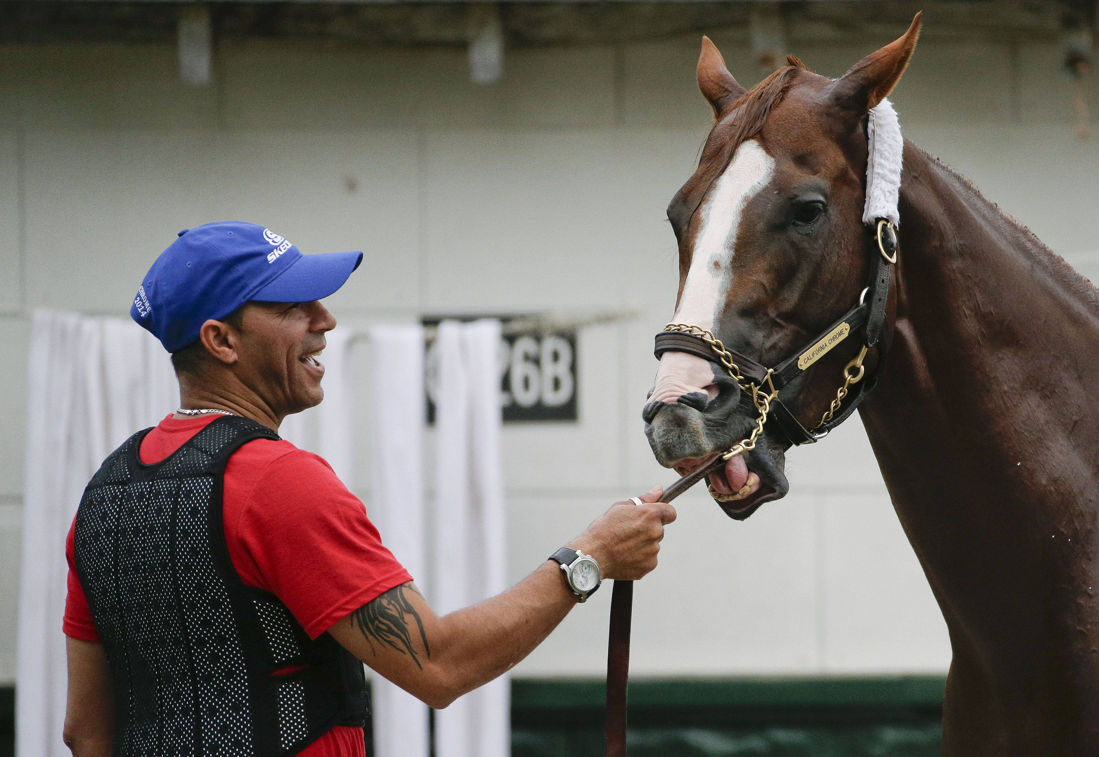 California Chrome plays with his bridle as exercise rider Willie Delgado holds him during a bath after workout at Belmont Park on Wednesday.