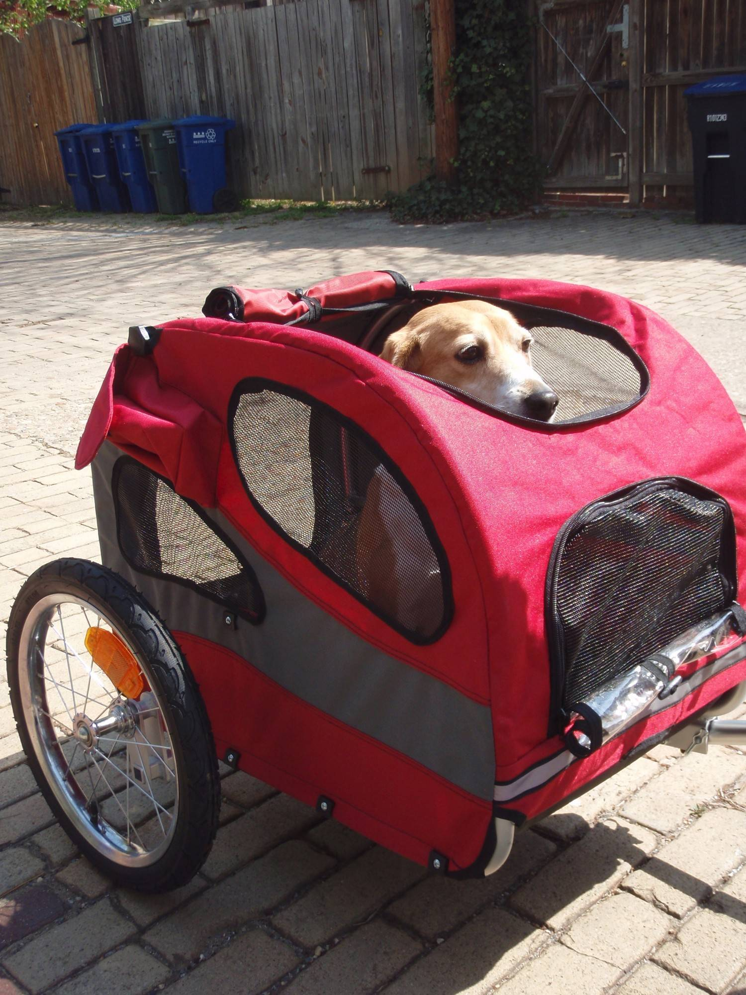 Hammy prepares for his first test ride in the Solvit HoundAbout II Bicycle Trailer.