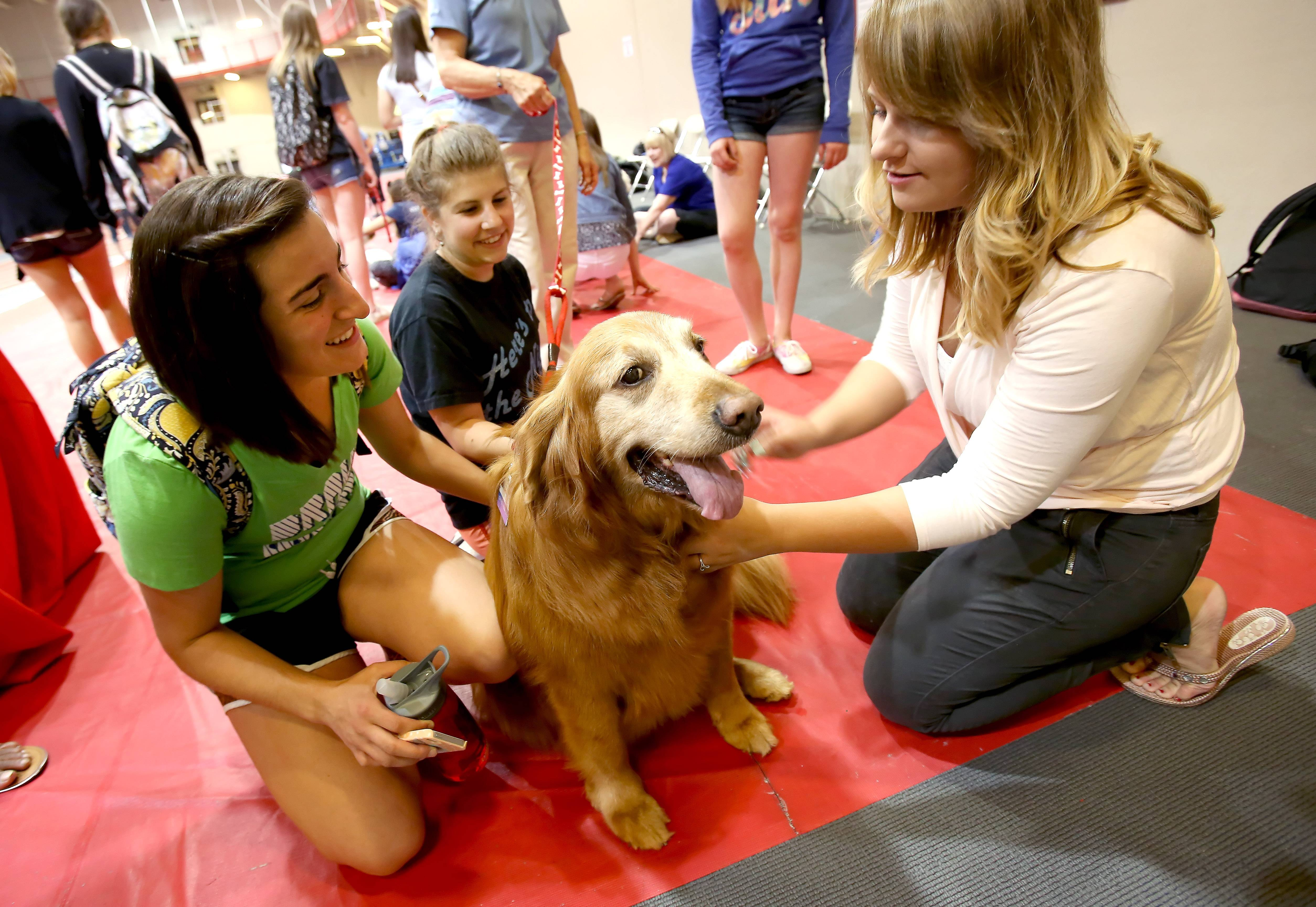 Students Melissa Musto, Nicolette Natalino and Julia Jones pet Quincy, a golden retriever, as part of the Dyson Dog Days at North Central College in Naperville.