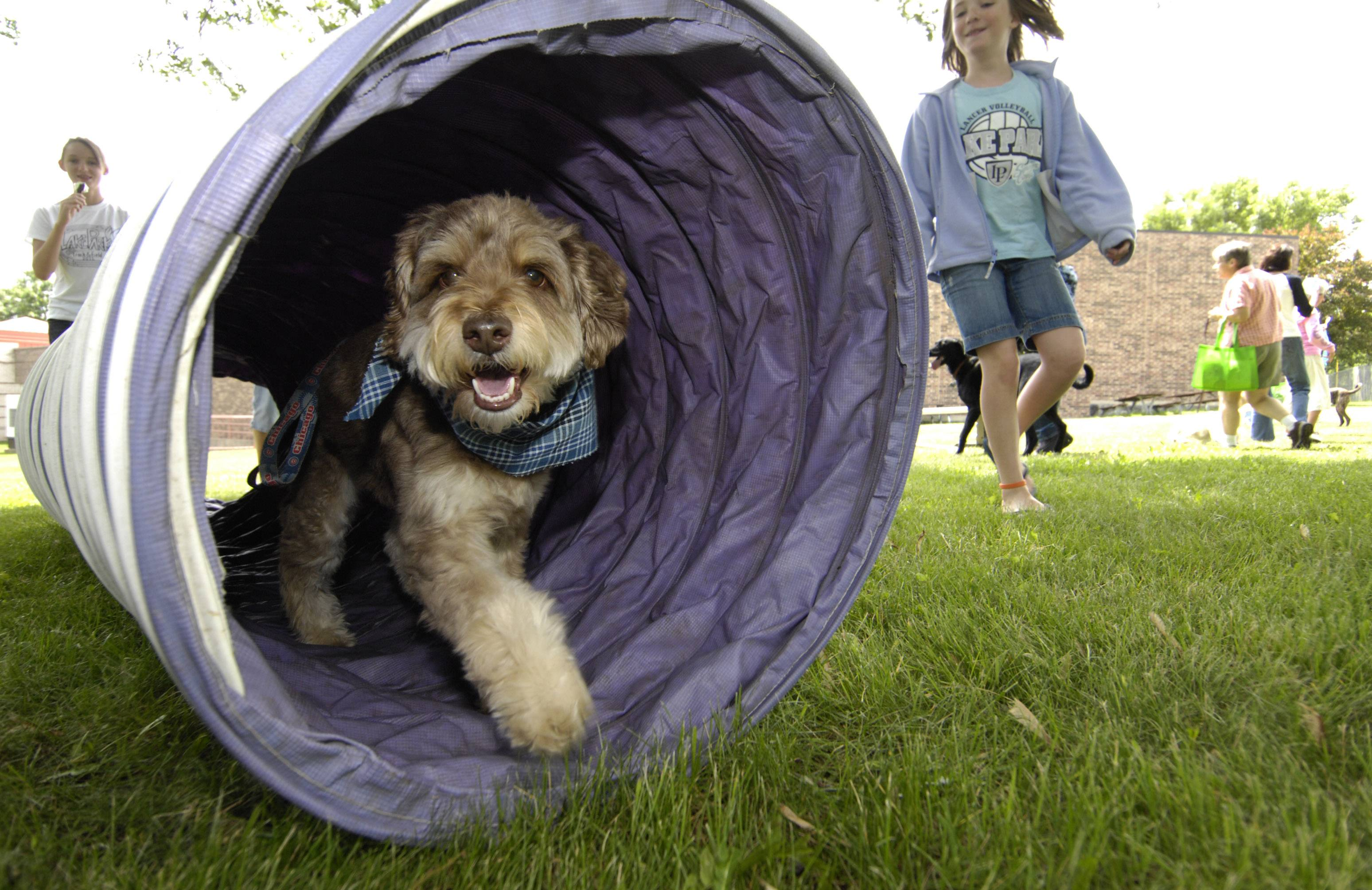 Dogs can navigate an agility/obstacle course Sunday, June 8, during Medinah Park District's Dog Day of Summer event.