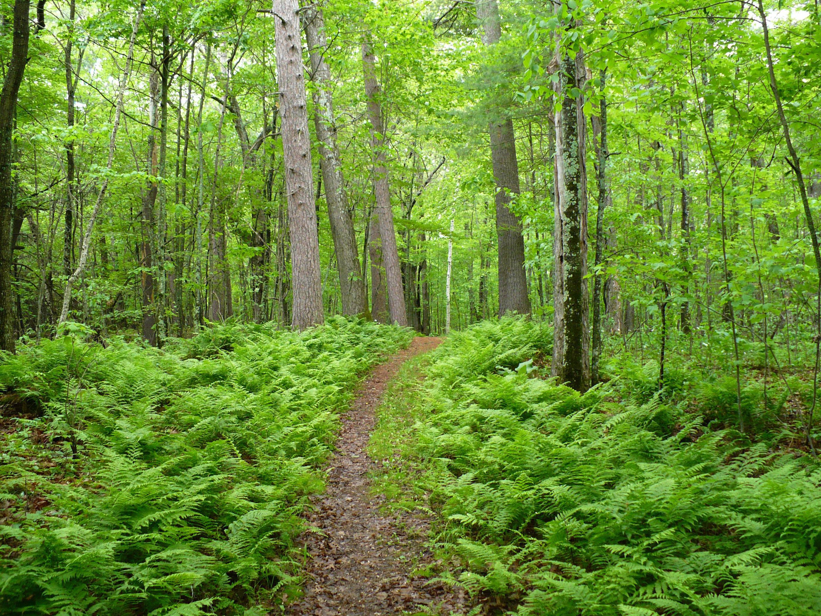 This was taken on a fern-lined trail in Northern Wisconsin. If green is your favorite color, you might like this place.