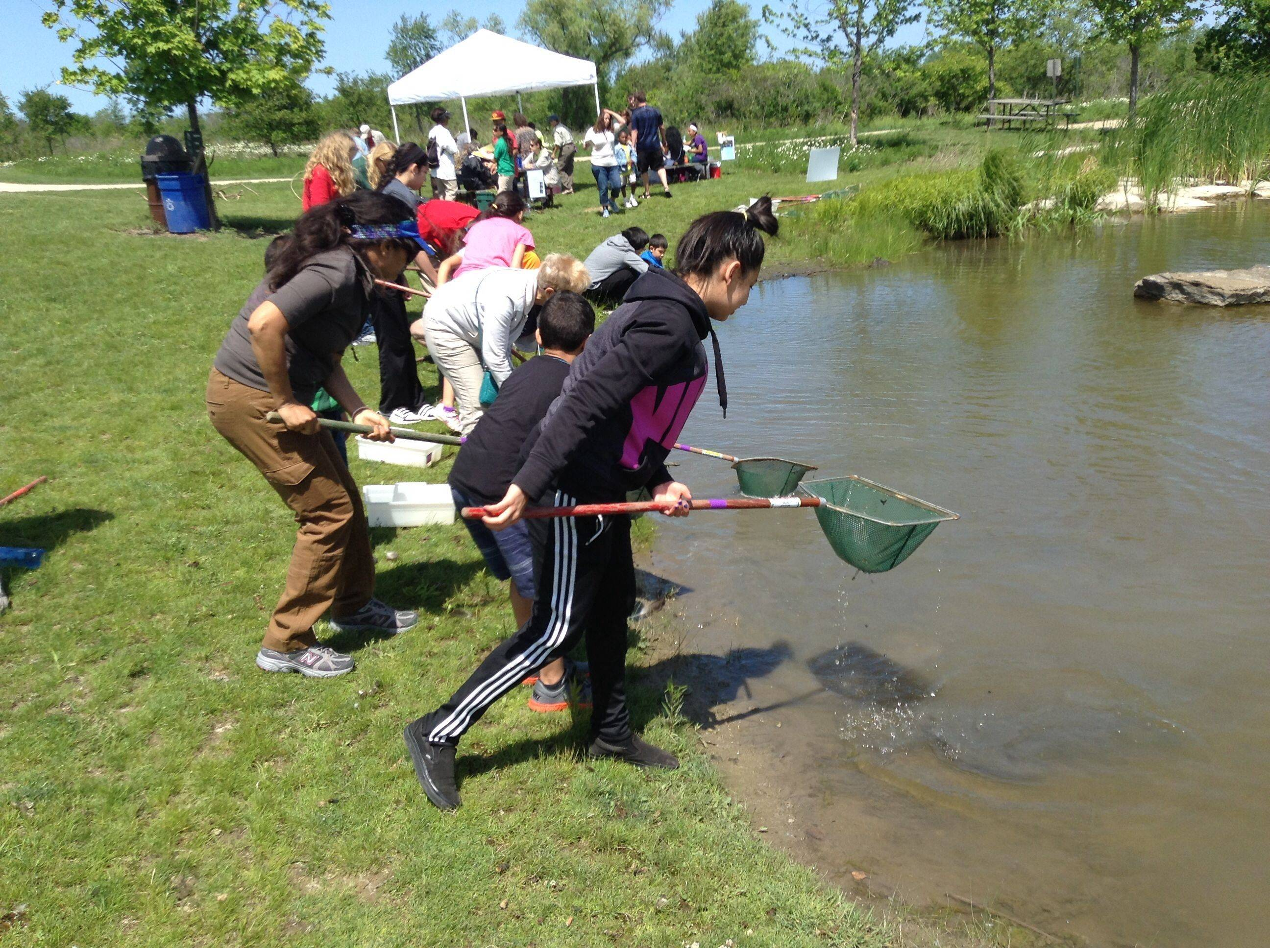 Children taking part in Sunday's Kids Nature Funfest at the Greenbelt Cultural Center in North Chicago ready their nets for some pond scooping Sunday afternoon. The nets were dipped into the pond's muddy bottom to see what kinds of insects lived in the muck.