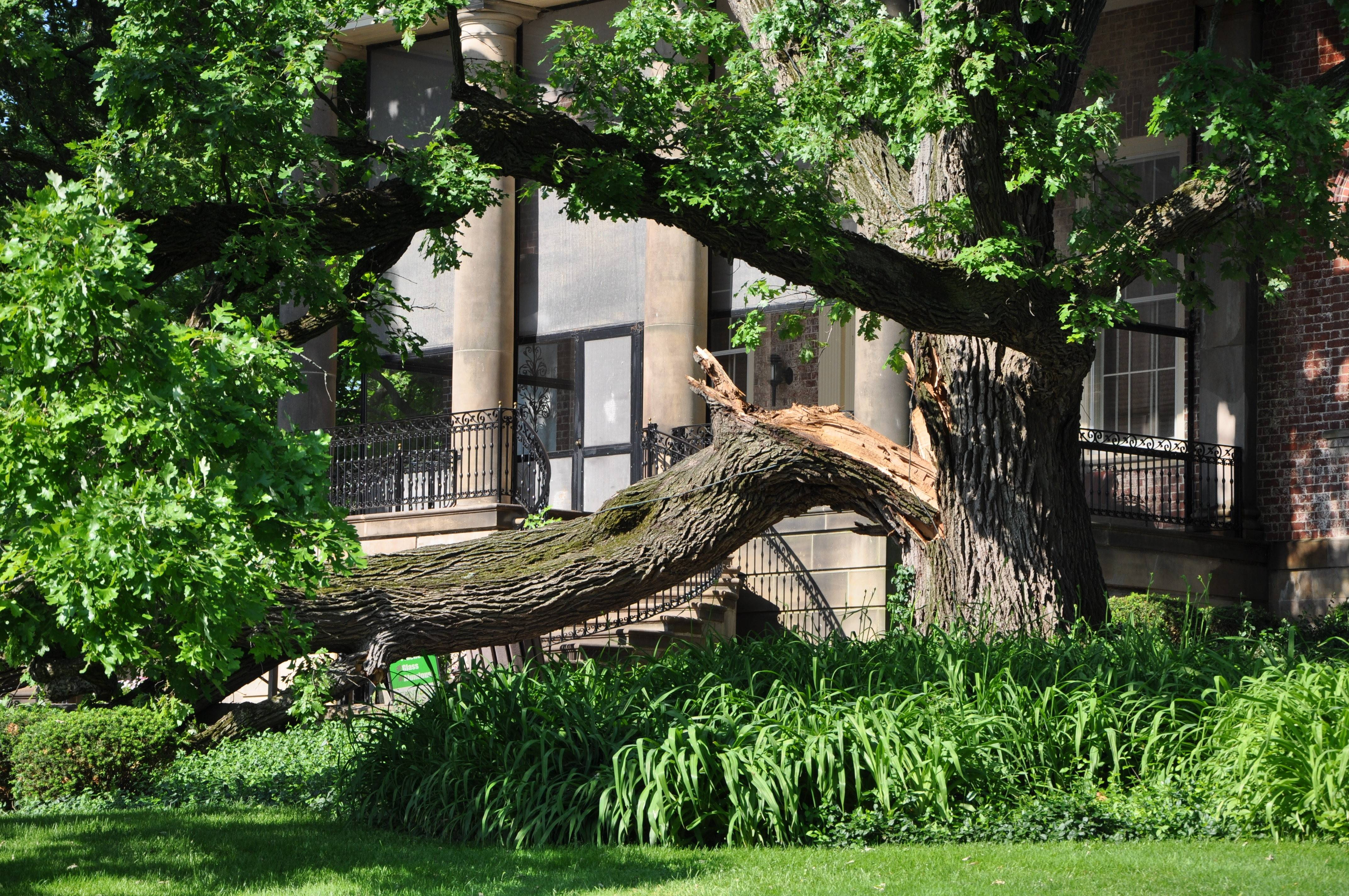 A large branch fell Sunday from a tree on the east side of the McCormick Museum at Cantigny Park in Wheaton, injuring three people and damaging a bench and a garbage can.
