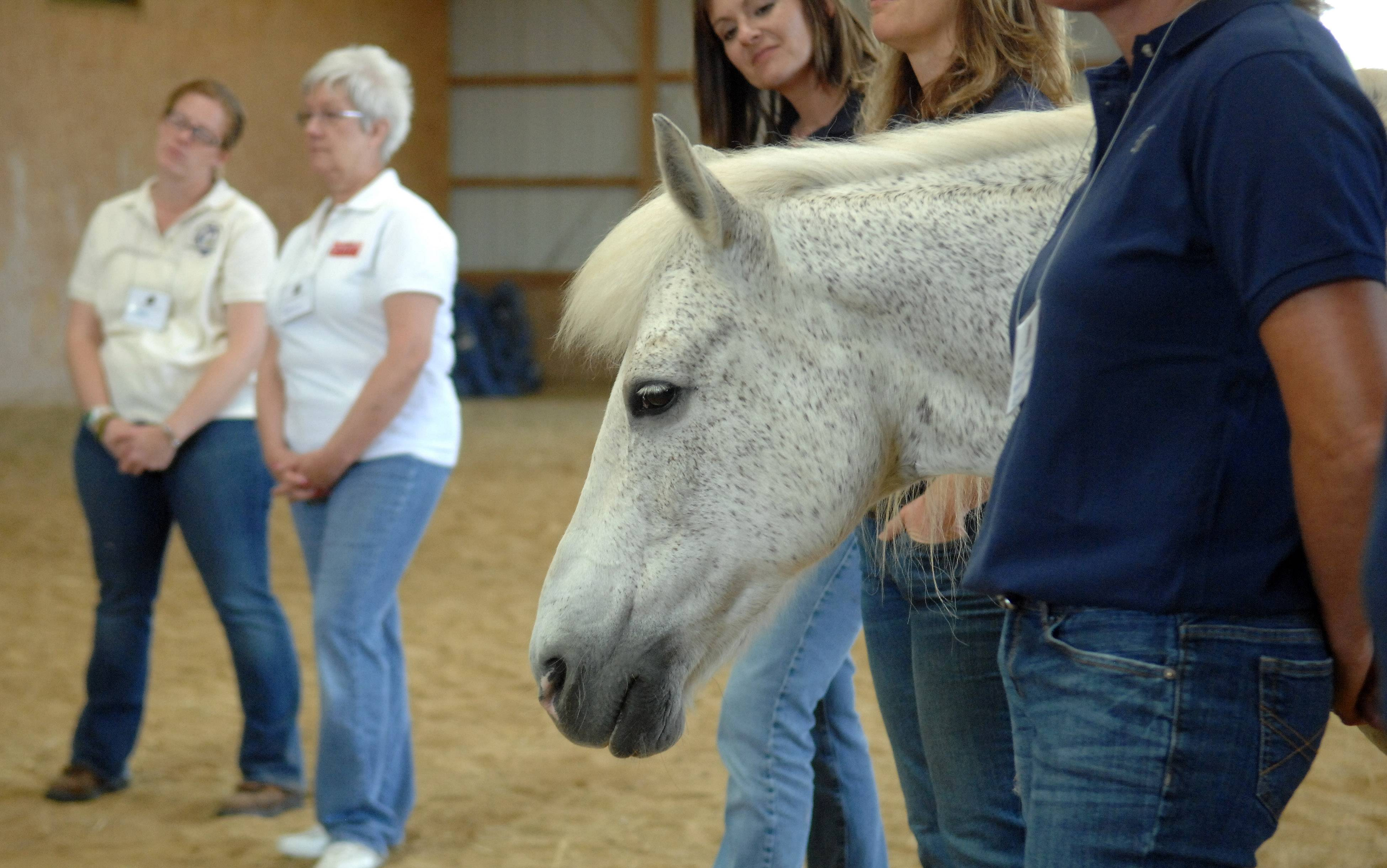 One of the therapy horses pokes his head into the action Monday at an equine-assisted therapy demonstration Monday at Reins of Change in Elgin.