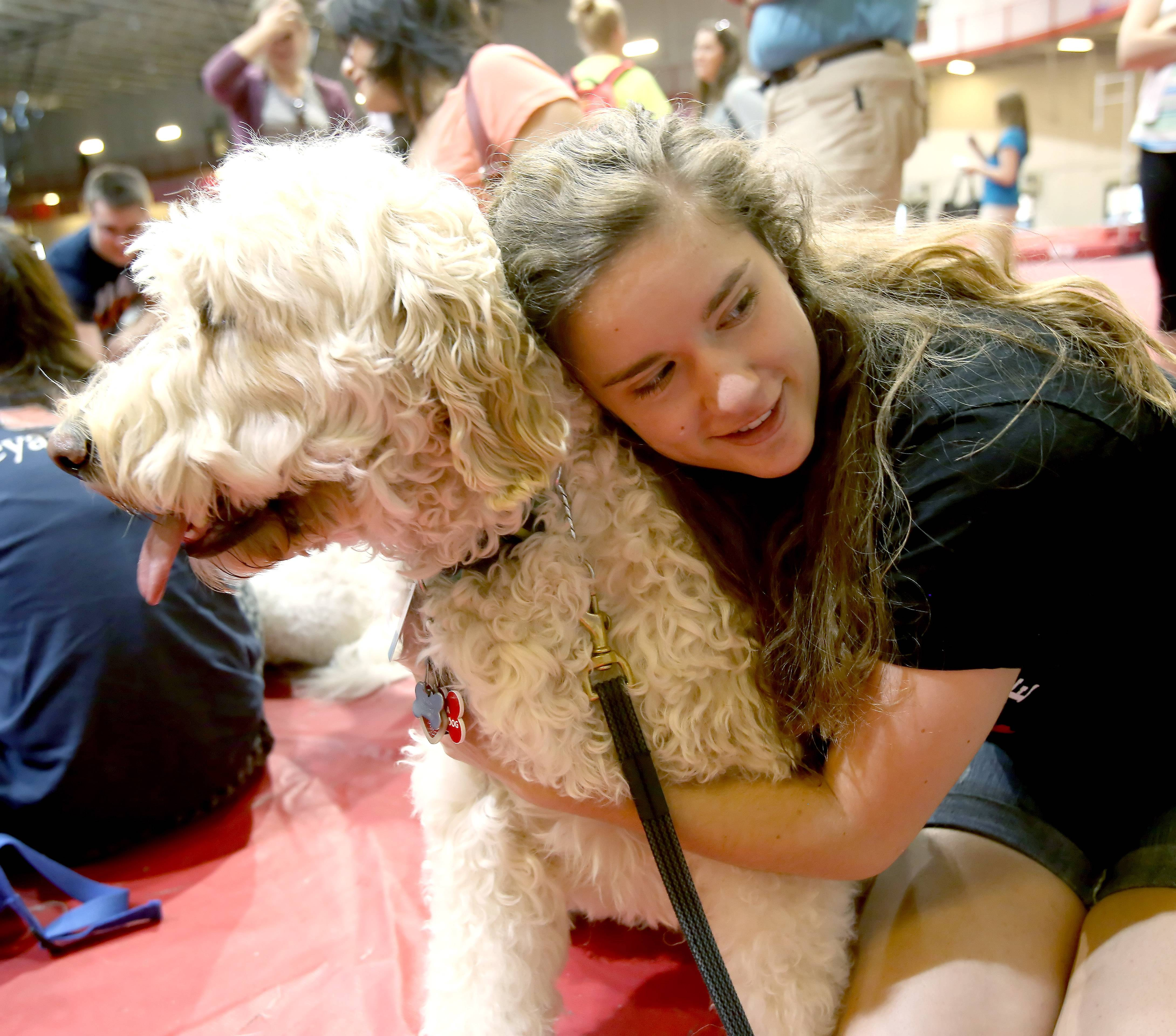 Taylor Harrison, a junior, hugs Holly as therapy dogs visit North Central College in Naperville during Dyson Dog Days on Thursday, to help students deal with stress during finals. The therapy dogs from Animal-Assisted Therapy at Edward Hospital made a visit to Res/Rec Center.