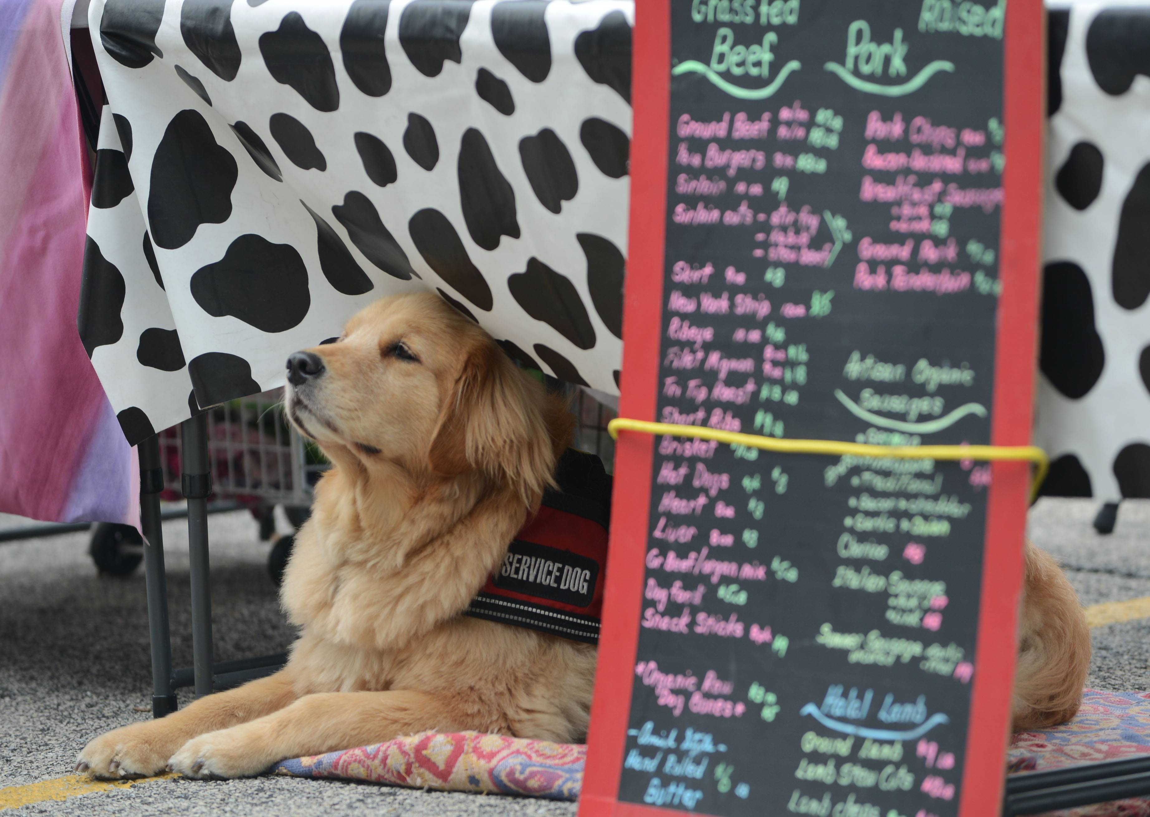 Annie, a golden retriever, watched folks at the Lake Zurich farmers market in Paulus Park from her owners' booth, Meat Goat.
