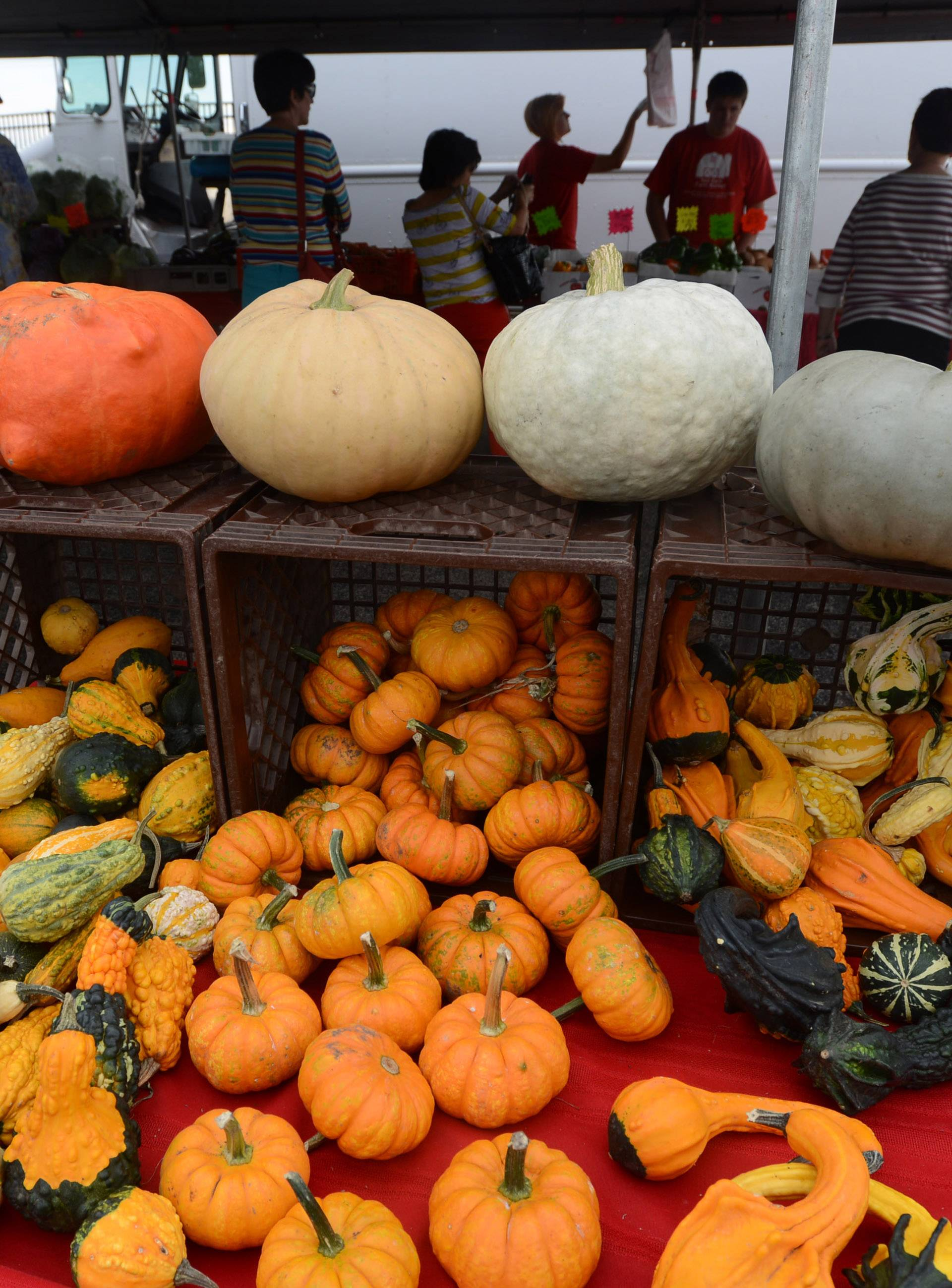 Red Barn Farm Market of Woodstock had plenty of gourds on hand at the Lake Zurich farmers market in Paulus Park. The market returns Friday, June 13.