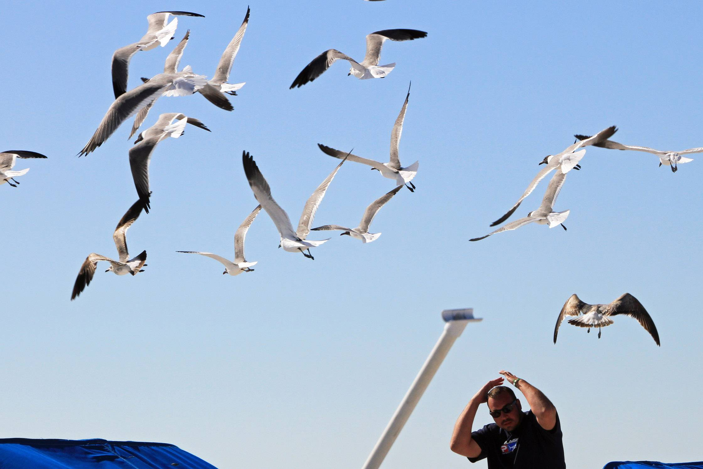 A fellow is buzzed by sea gulls after tossing food in to air on St. Pete Beach, Florida in March.