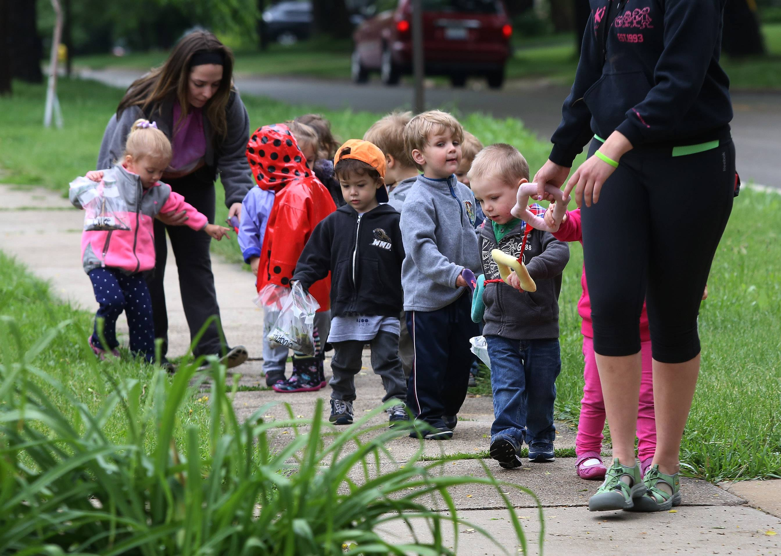 On a nature walk through downtown Grayslake, two-year-old children collect bugs, sticks and rocks as they make their way back to the 4Kids Childcare Learning Center Wednesday. The preschool children walked along rain soaked sidewalks as they scrambled to find objects for their class sensory table.
