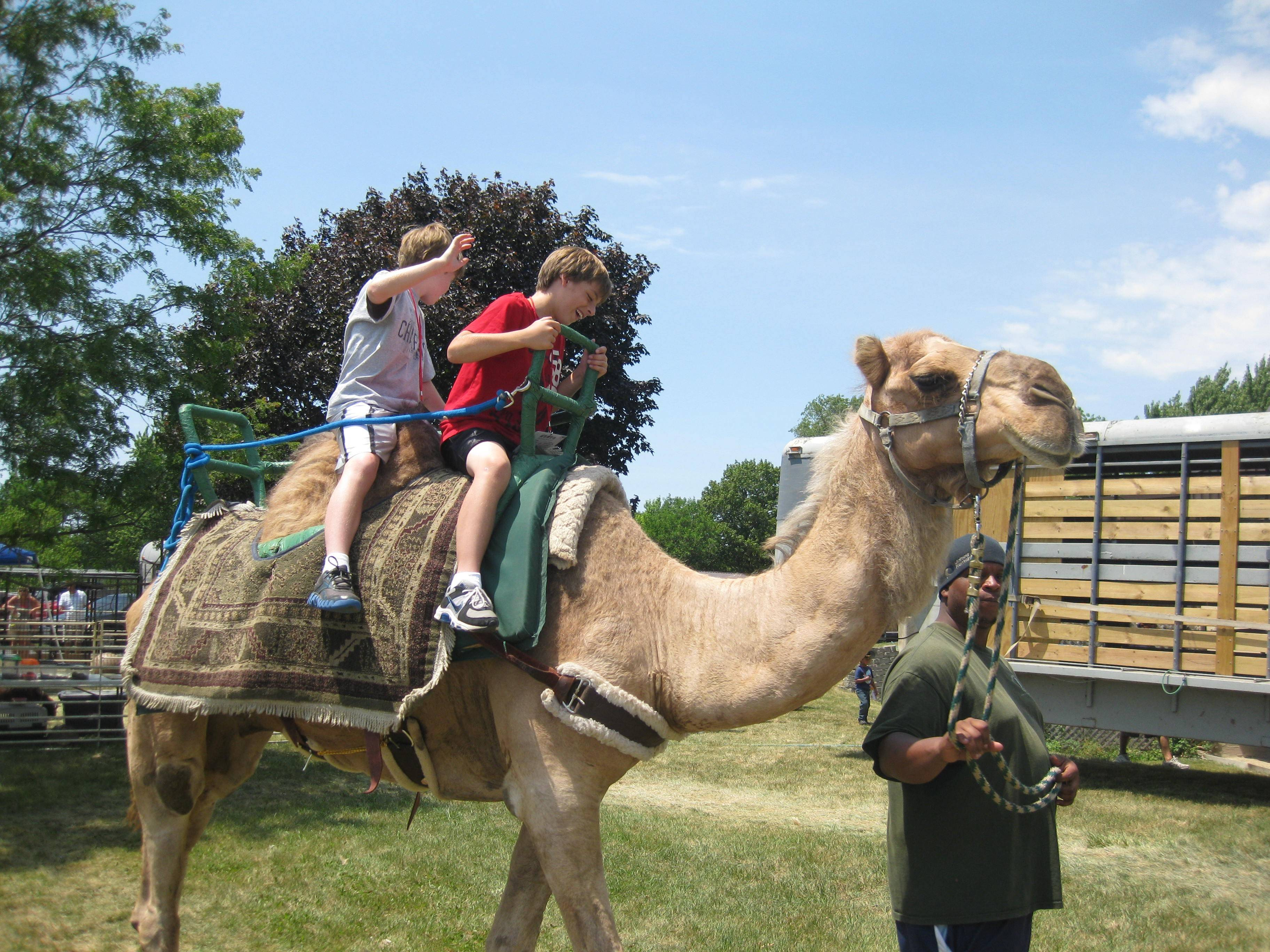Children ride a camel at last year's Little Boots Rodeo in Elk Grove Village.