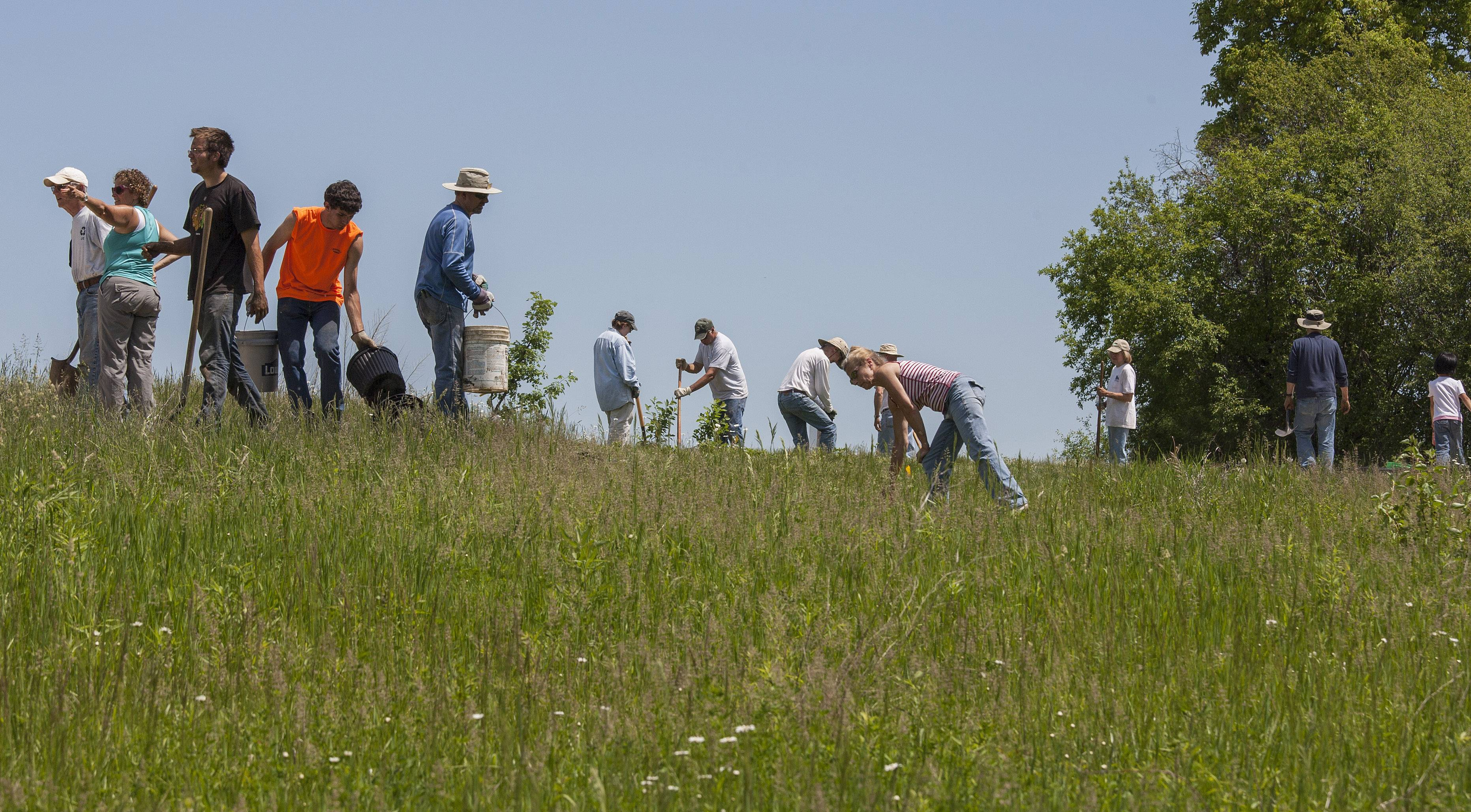 Twenty-three volunteers plant 160 trees and shrubs on a portion of Libertyville Township Open Space