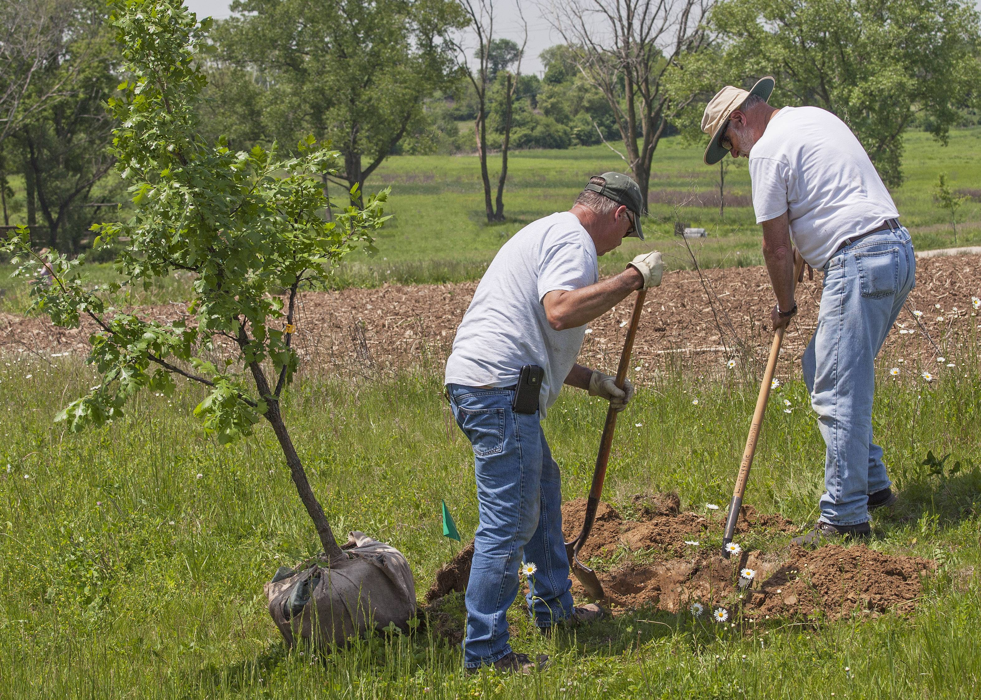 Jack Nowak, left, and Don Wilson prep a hole for an oak tree in the Libertyville Township Open Space.