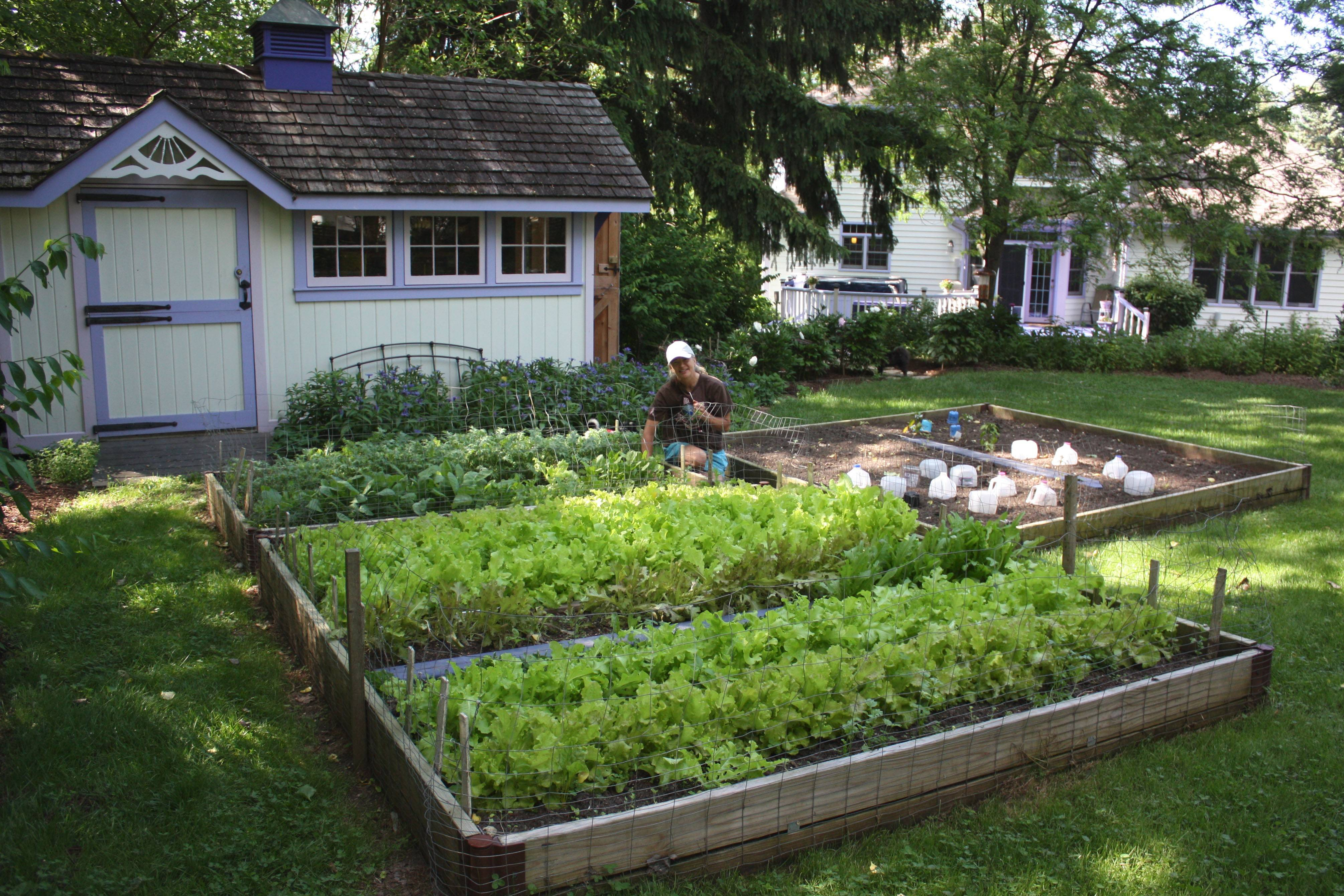 The raised garden beds Claire Goldenberg tends keeps the family supplied with a variety of lettuces for organic mixed-greens salads. The charming garden shed keeps all necessary implements nearby. Tender green pepper plants warm under the protective plastic jugs.