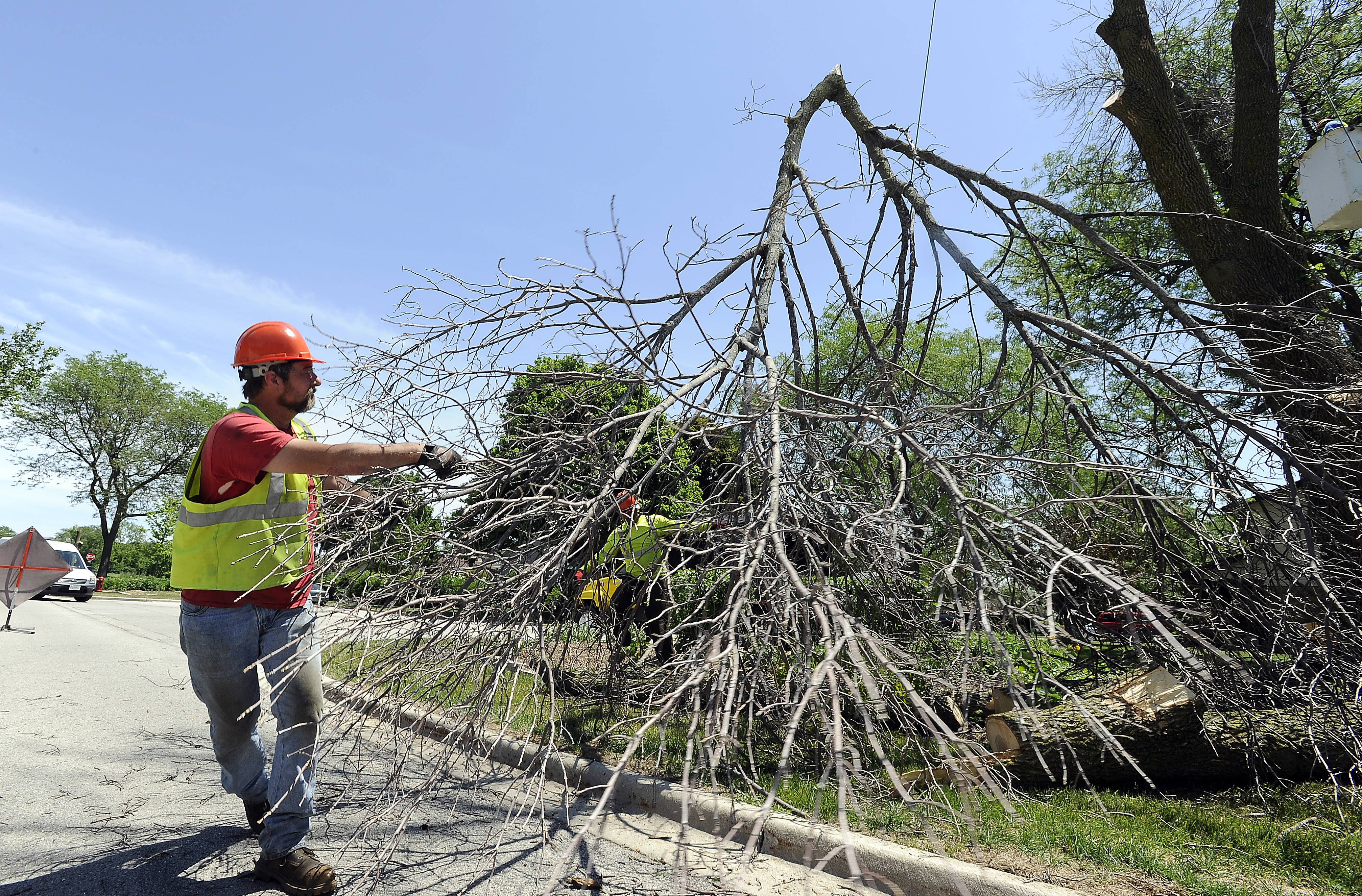 Harry Geffert of Powell Tree Care on Tuesday removes branches from a tree infested with the emerald ash borer in Elk Grove Village.