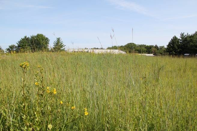Spring Valley's prairies will put on a natural light show with the help of these magical insects.Schaumburg Park District