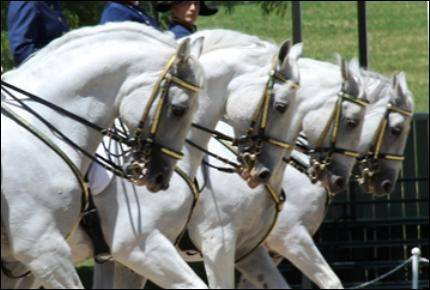 The Tempel Lipizzans perform their first show of the season this weekend.