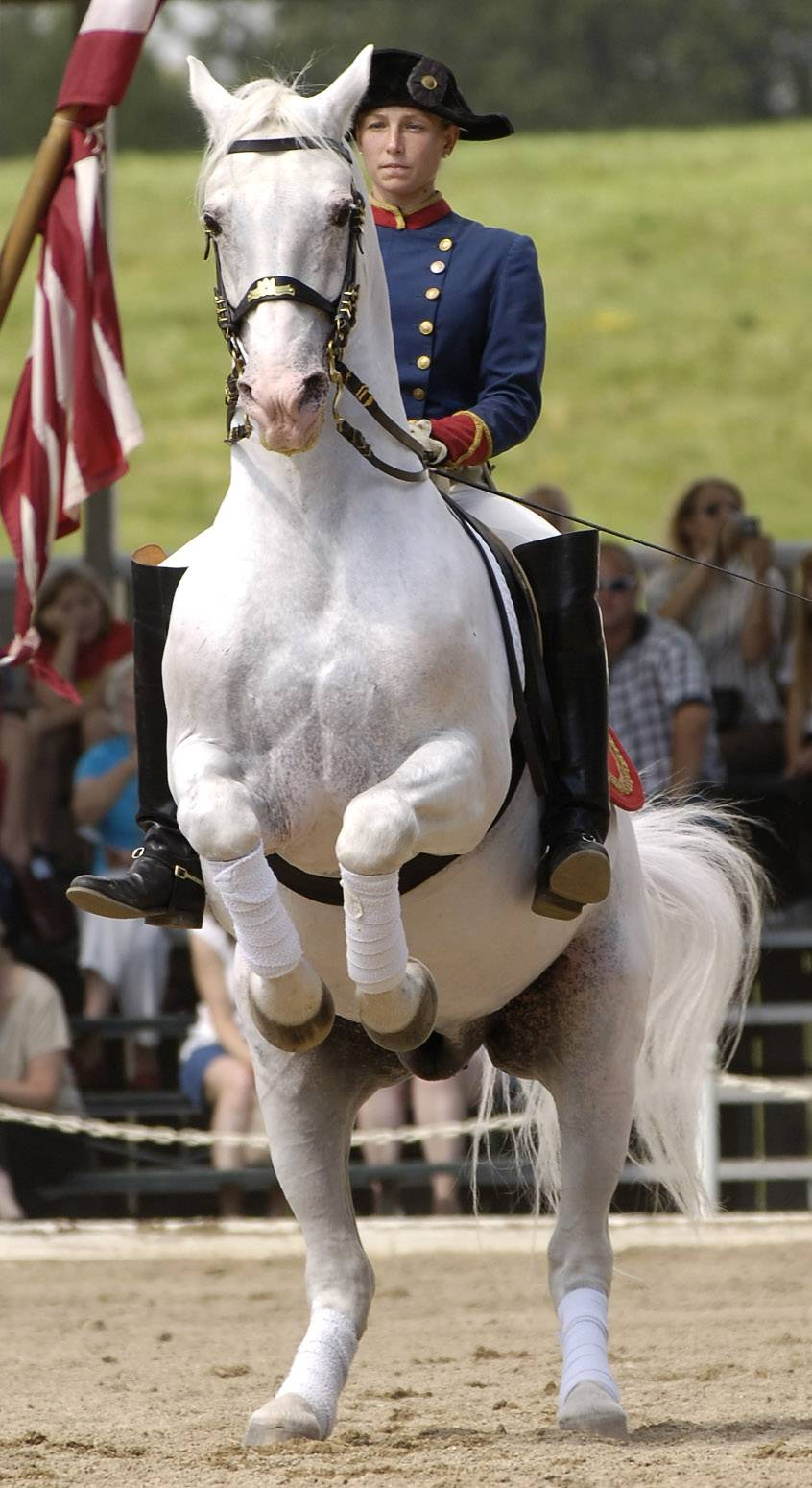 The official start of summer brings the return of the Temple Lipizzan in Old Mill Creek.