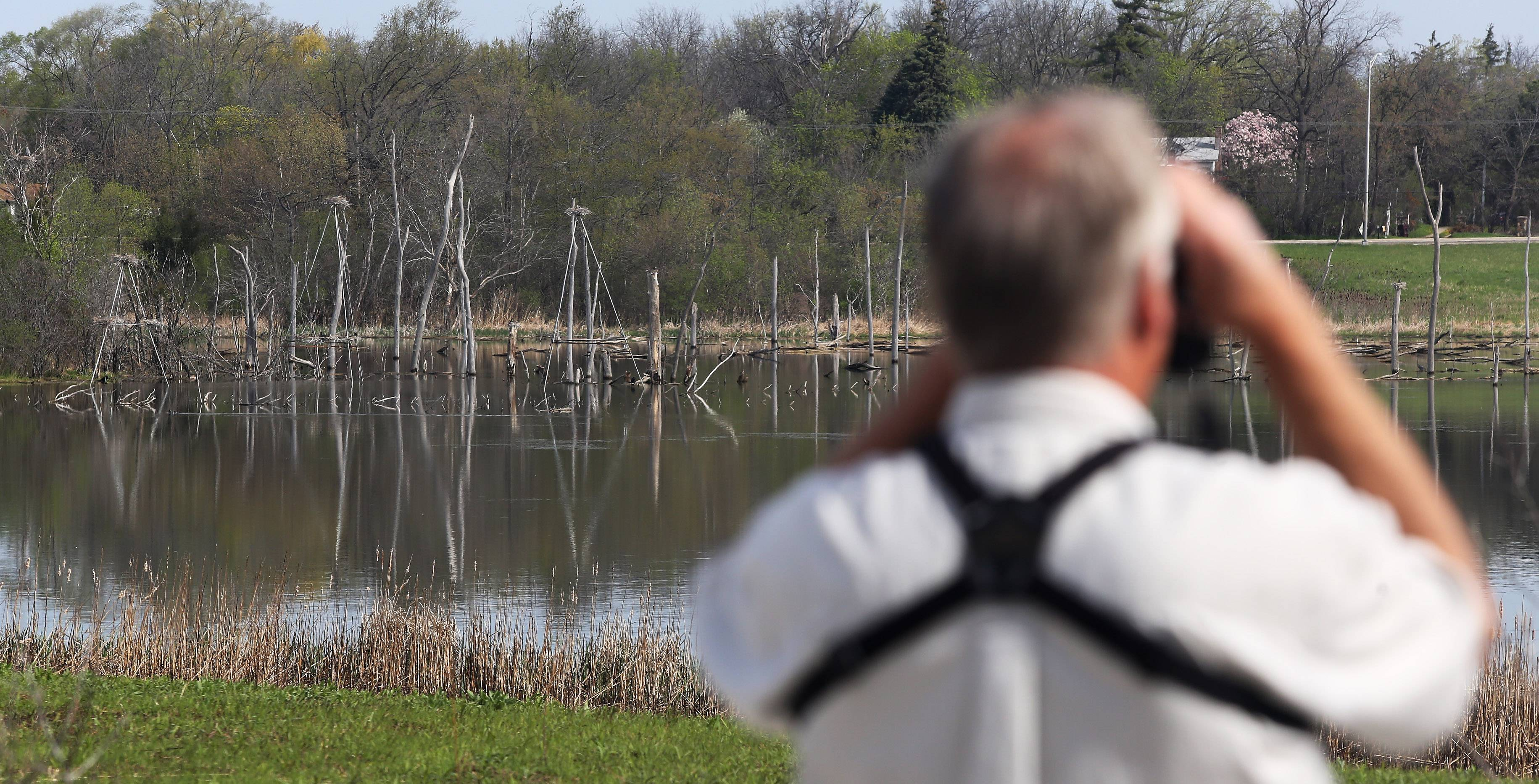 Nowak checks out the rookery as part of his job at the Almond Marsh Rookery near Wildwood in the Lake County Forest Preserve District.
