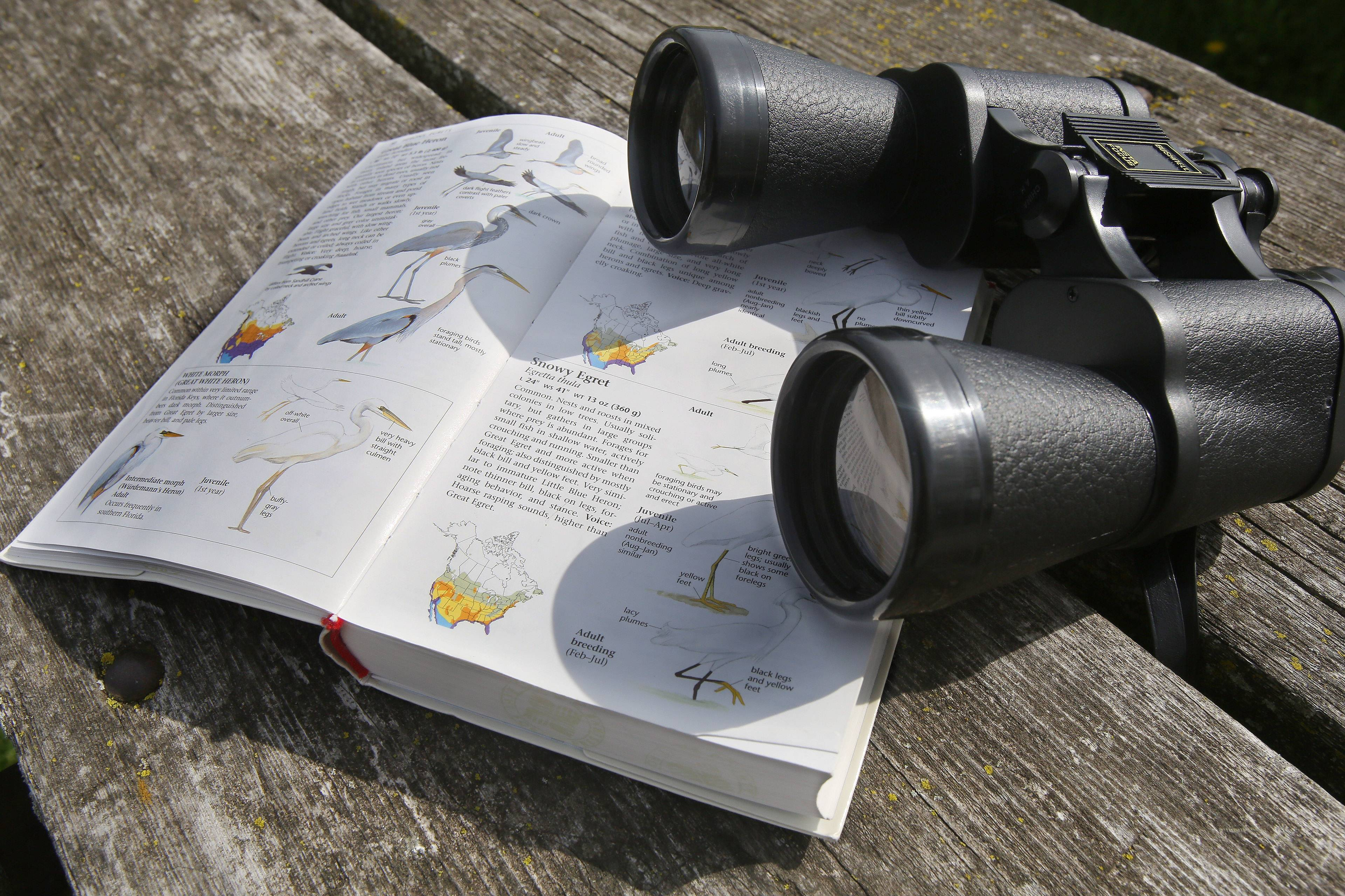 Bird books and binoculars are necessary tools for Nowak.