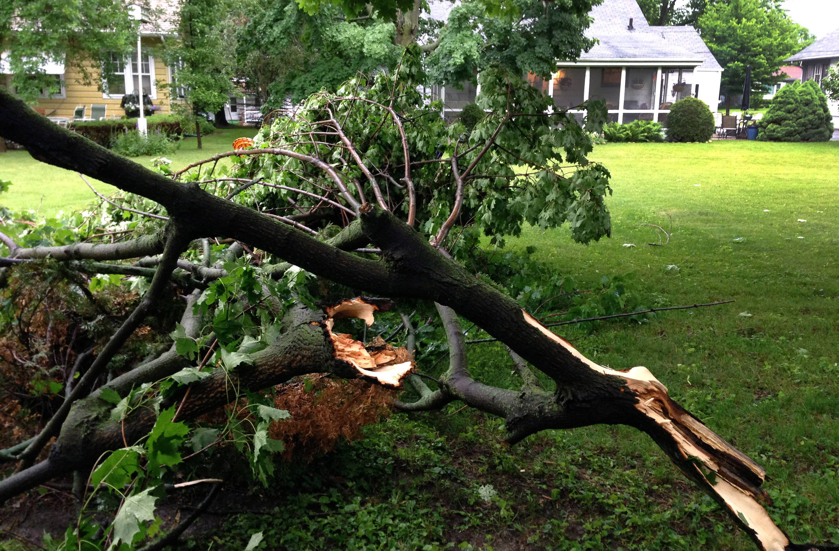 High winds and rain moved through Crystal Lake Saturday evening, knocking down branches and causing residents to seek shelter.