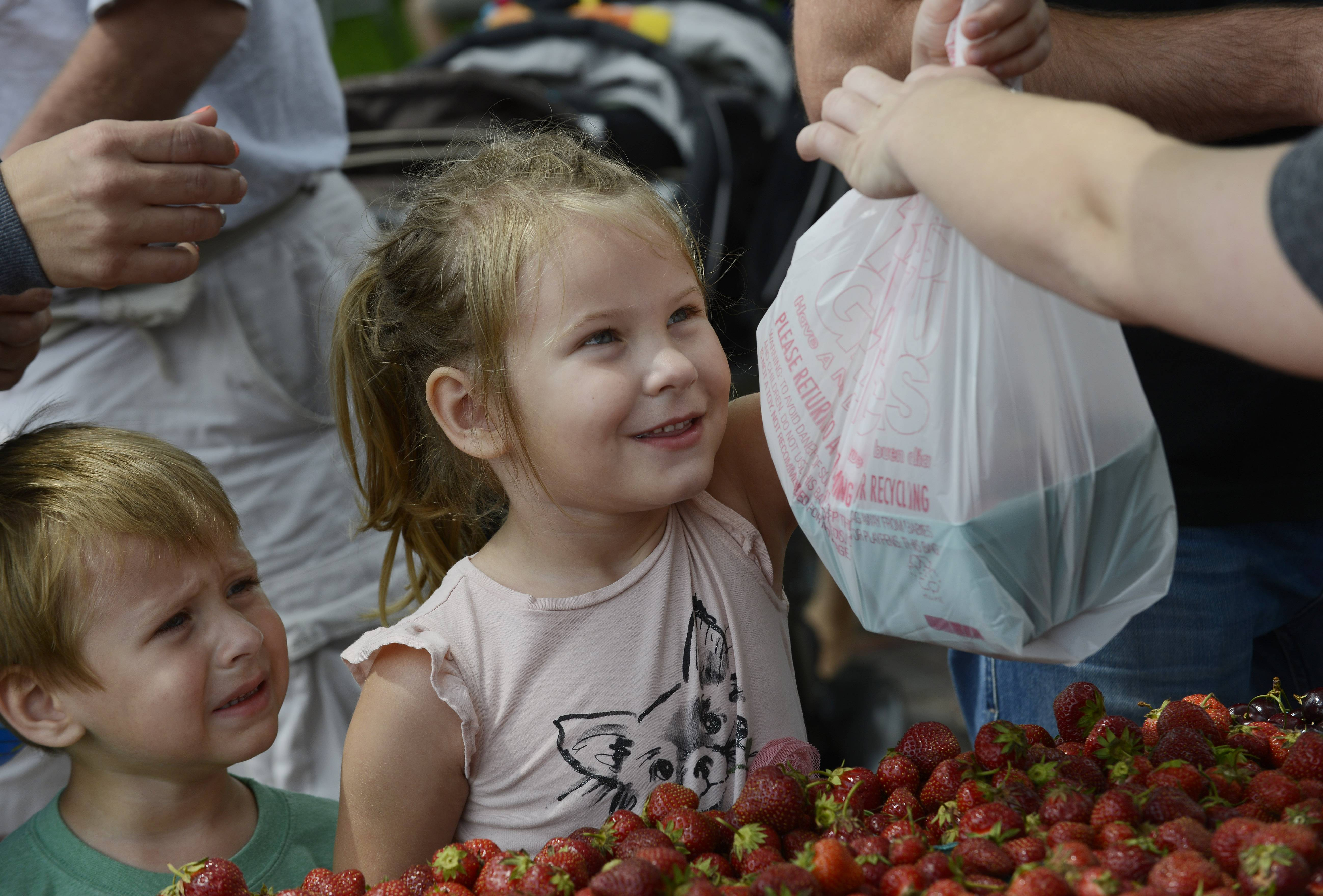Vanessa Miecznikowski, 5, of Long Grove receives a bag of strawberries that she and her brother, Max, 3, selected at the Frank Farms Fresh Produce table during the Long Grove Strawberry Festival Saturday.