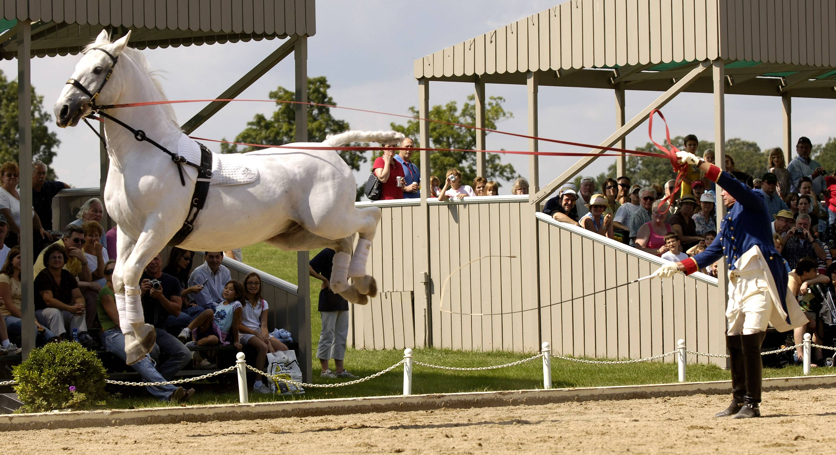 The Tempel Lipizzan horses will demonstrate dramatic leaps and lifts as Tempel Farms opens its summer performance season on Saturday, June 21.