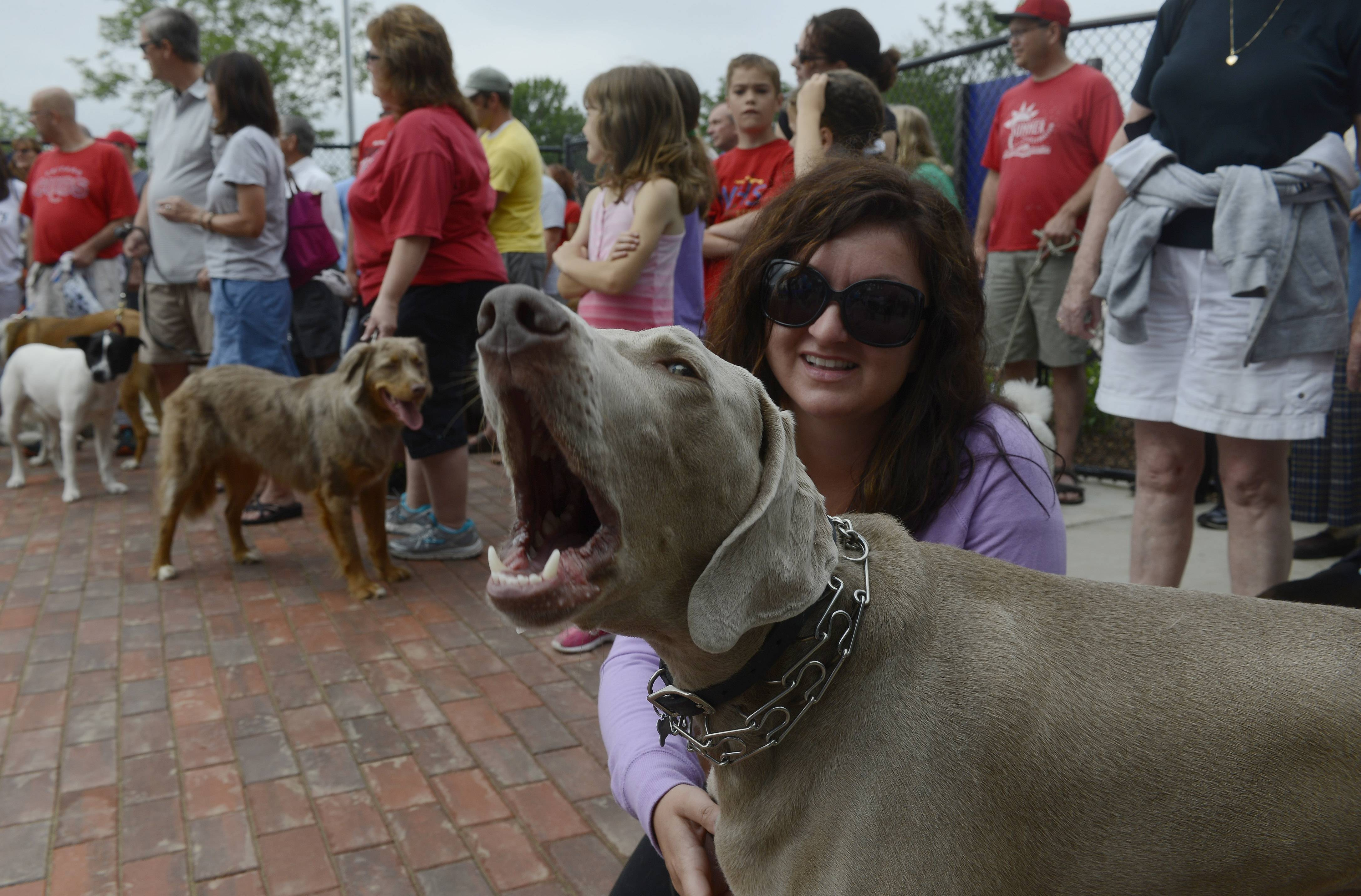 Turbo, a Weimaraner owned by Sabina Mazurczyk of Arlington Heights, lends his voice to the grand opening ceremony of Canine Commons dog park at Melas Park in Mount Prospect.