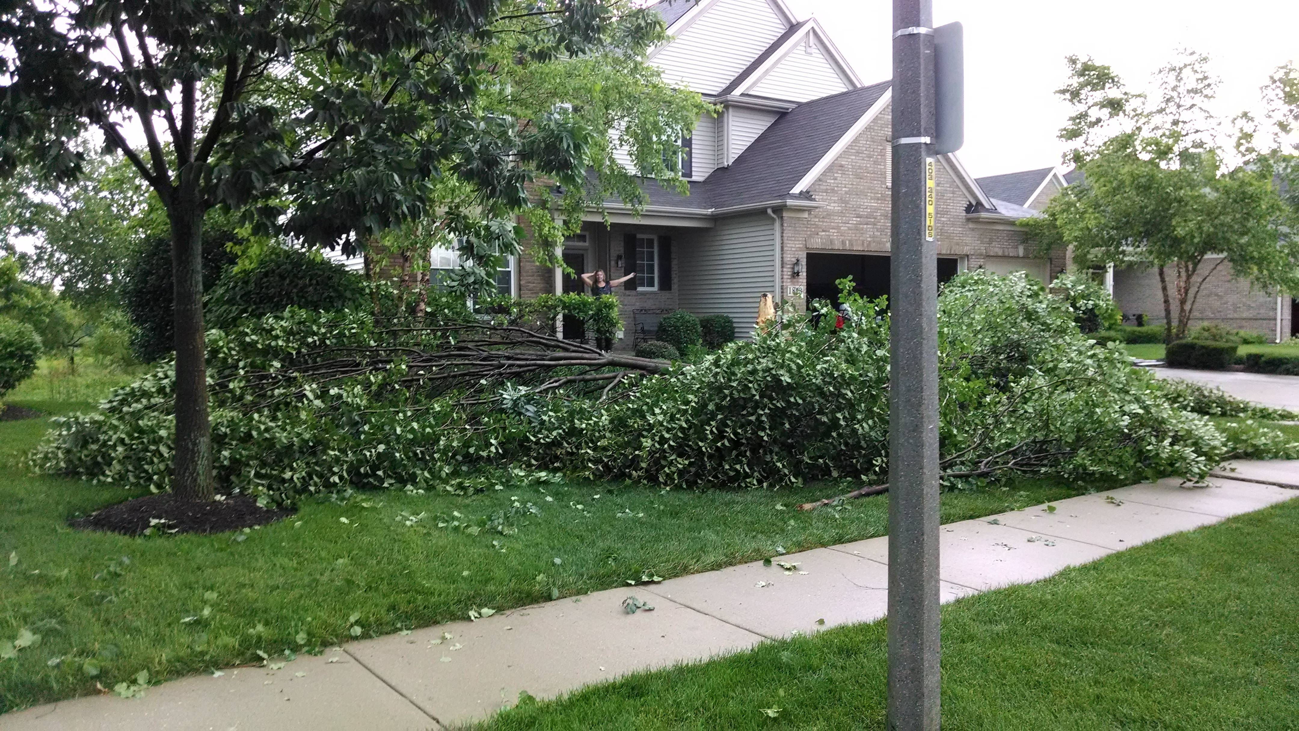 Storms toppled a tree Saturday in the Orchard Hills subdivision in Wauconda.