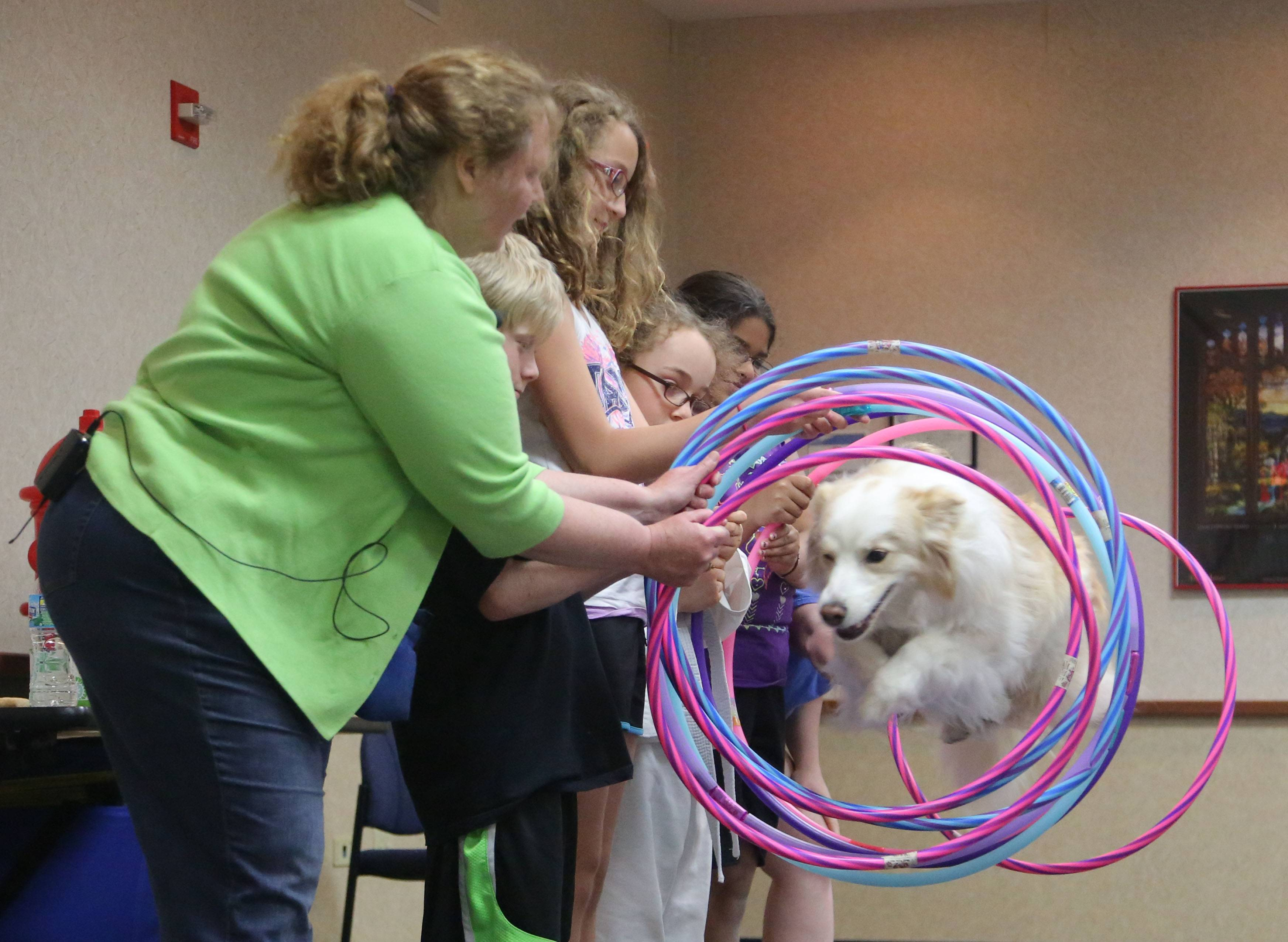Cedar, a border collie, jumps through nine hoops as Robin's Dog Stars perform for kids during a program called Best in Show Monday at Fremont Public Library in Mundelein.