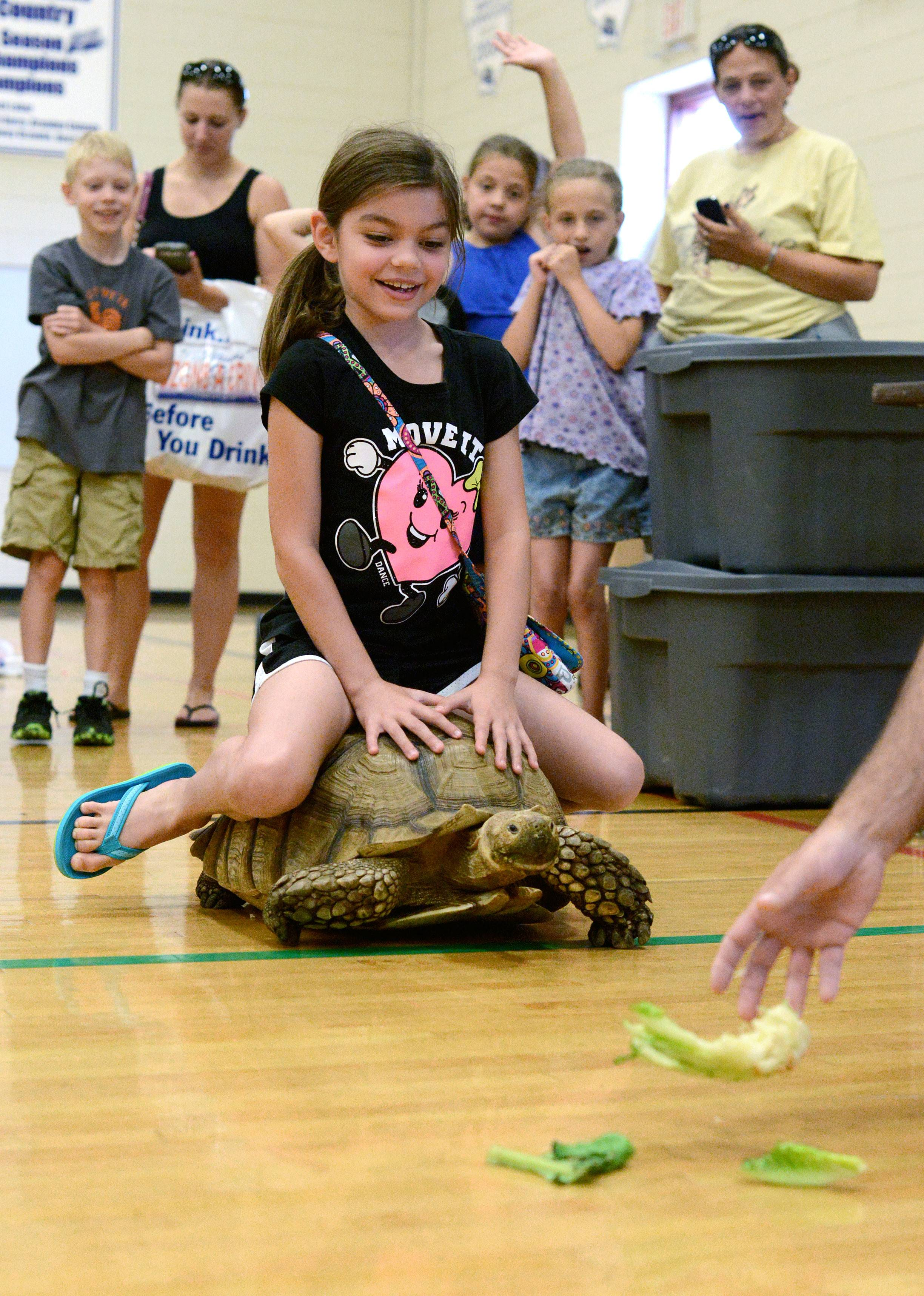 Abigail Rybicki, 7, of Algonquin takes a ride on Boulder, an African sulcata tortoise, as he makes a beeline for fresh lettuce during a reptile show at the Children's Safety Expo. Boulder is 30 years old.