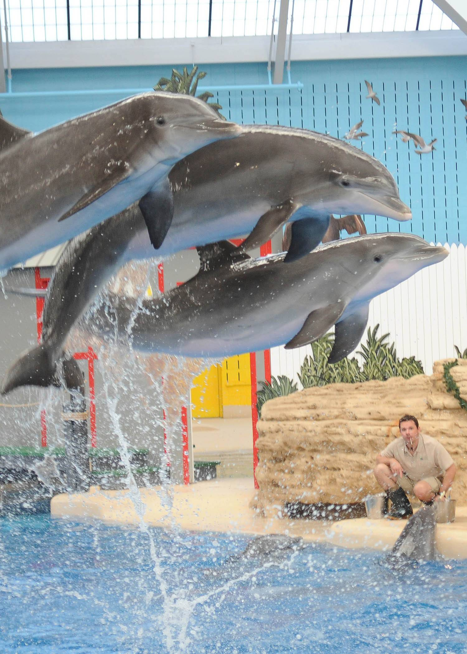 Guests can take in a special 6 p.m. Dolphins in Action show during Brookfield Zoo's Summer Nights on Fridays and Saturdays, now through July 26.