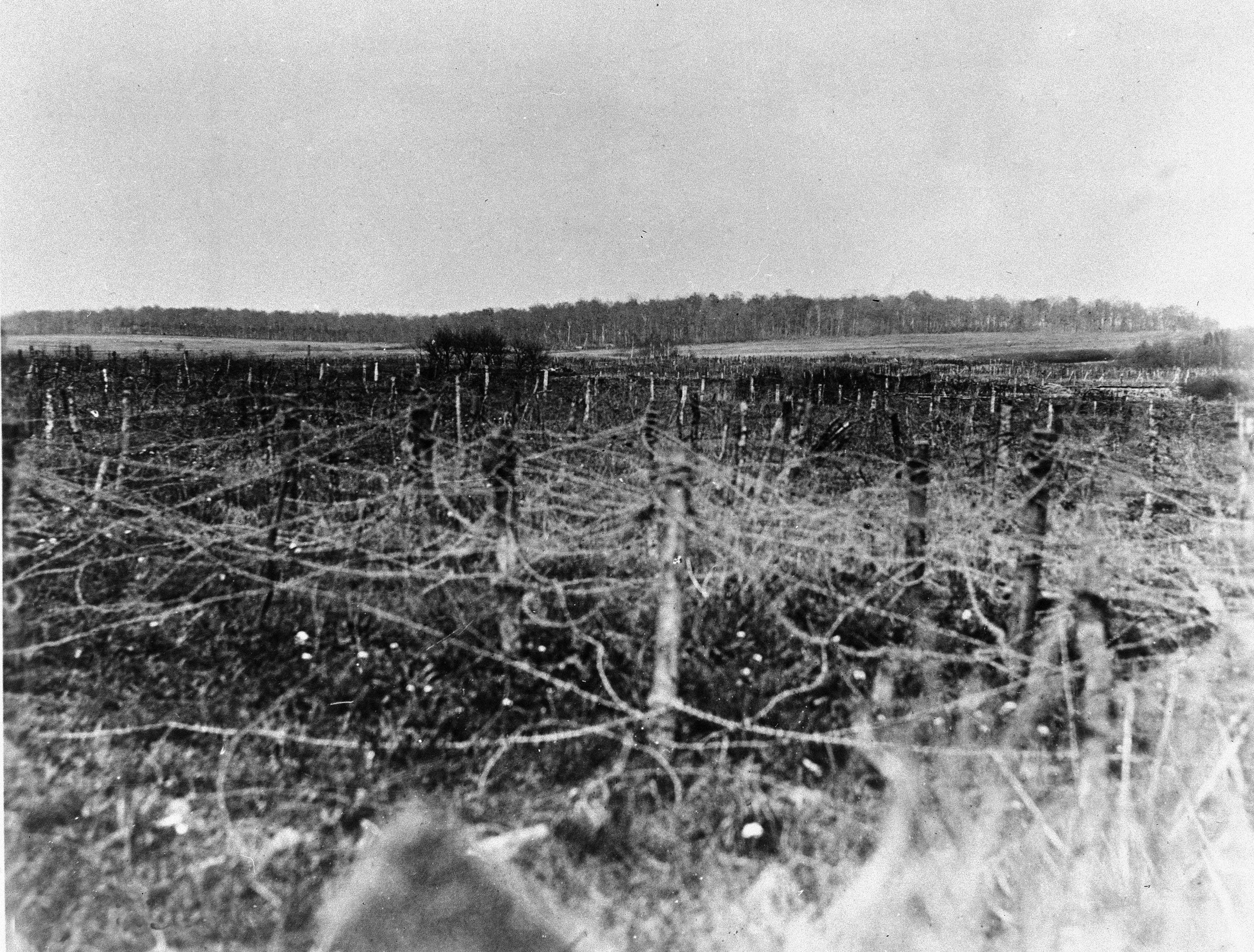 83 OF 100: In this April 25, 1918, file photo, a field of barbed wire in a no-man's land near Ancerviller, France, during World War I. The area was a sector of the 2nd Battalion, 165th Infantry.