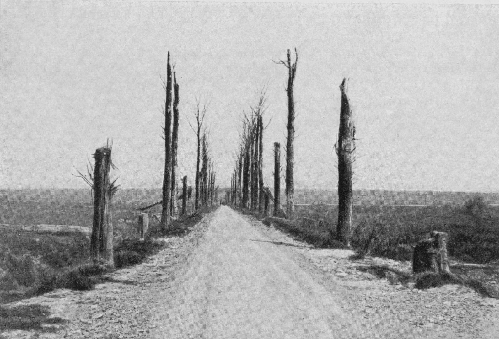 In this undated photo provided by Stad Mesen, shows the destruction on the road from Chateau de la Hutte to the Messines Ridge in Messines, Belgium. The area surrounding Messines ridge was bitterly fought over during the Battle of Messines in June 1917. At the end of four years of war the region was completely devastated.