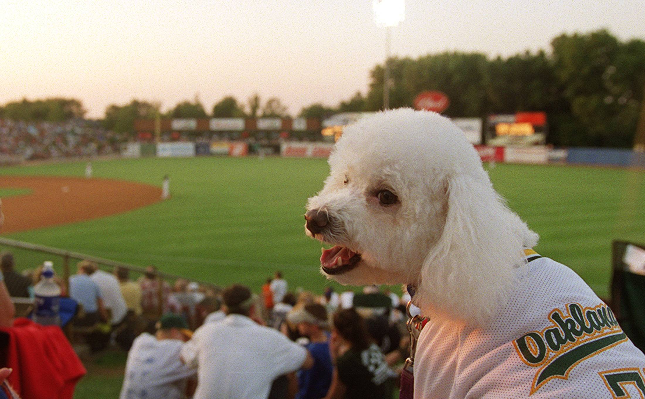 Bark in the Park at the Kane County Cougars game