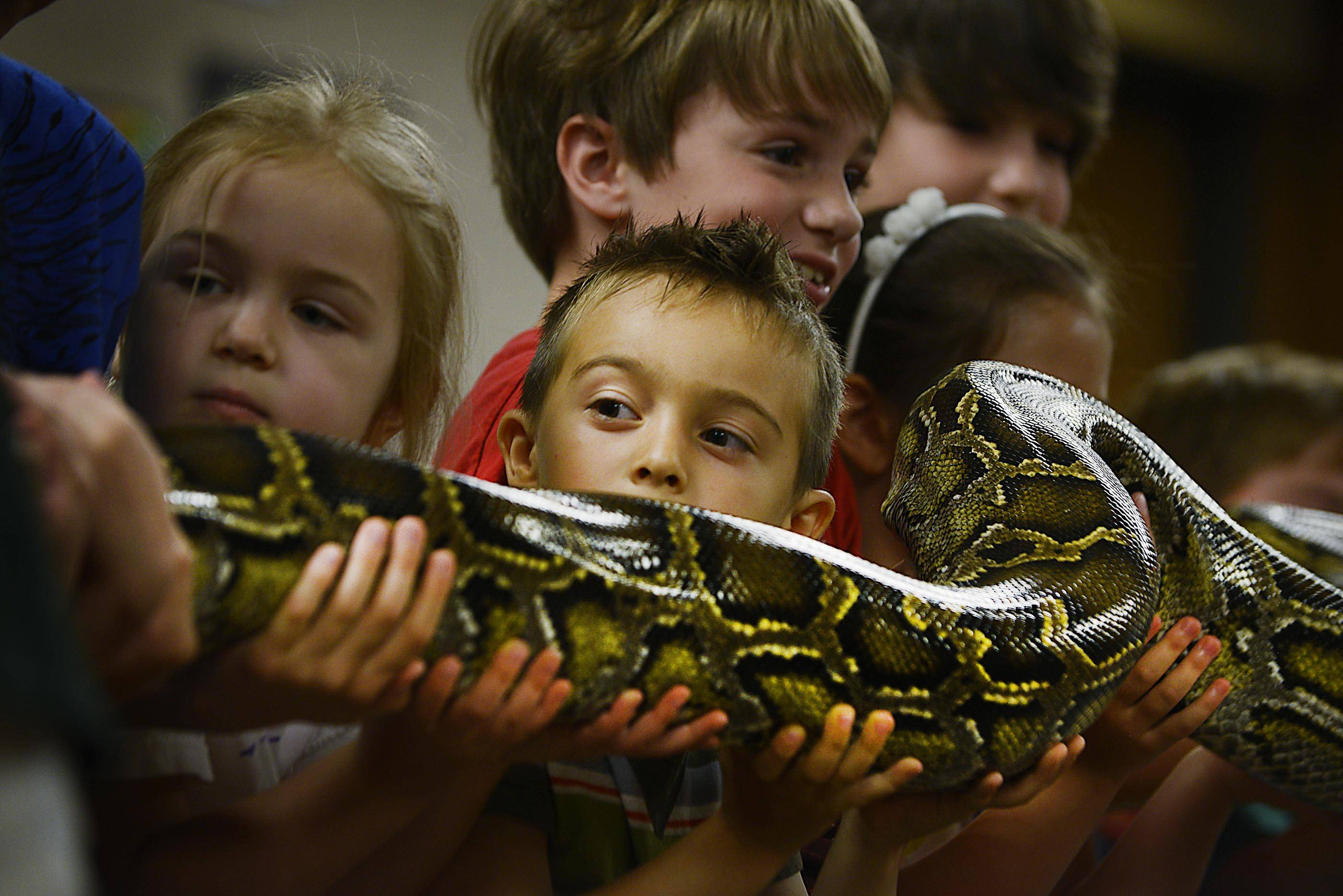 Nathan Leslie, 5, of St. Charles holds a Burmese Python with several other children Monday during a program by Dave DiNaso's Traveling World of Reptiles at the St. Charles Public Library.