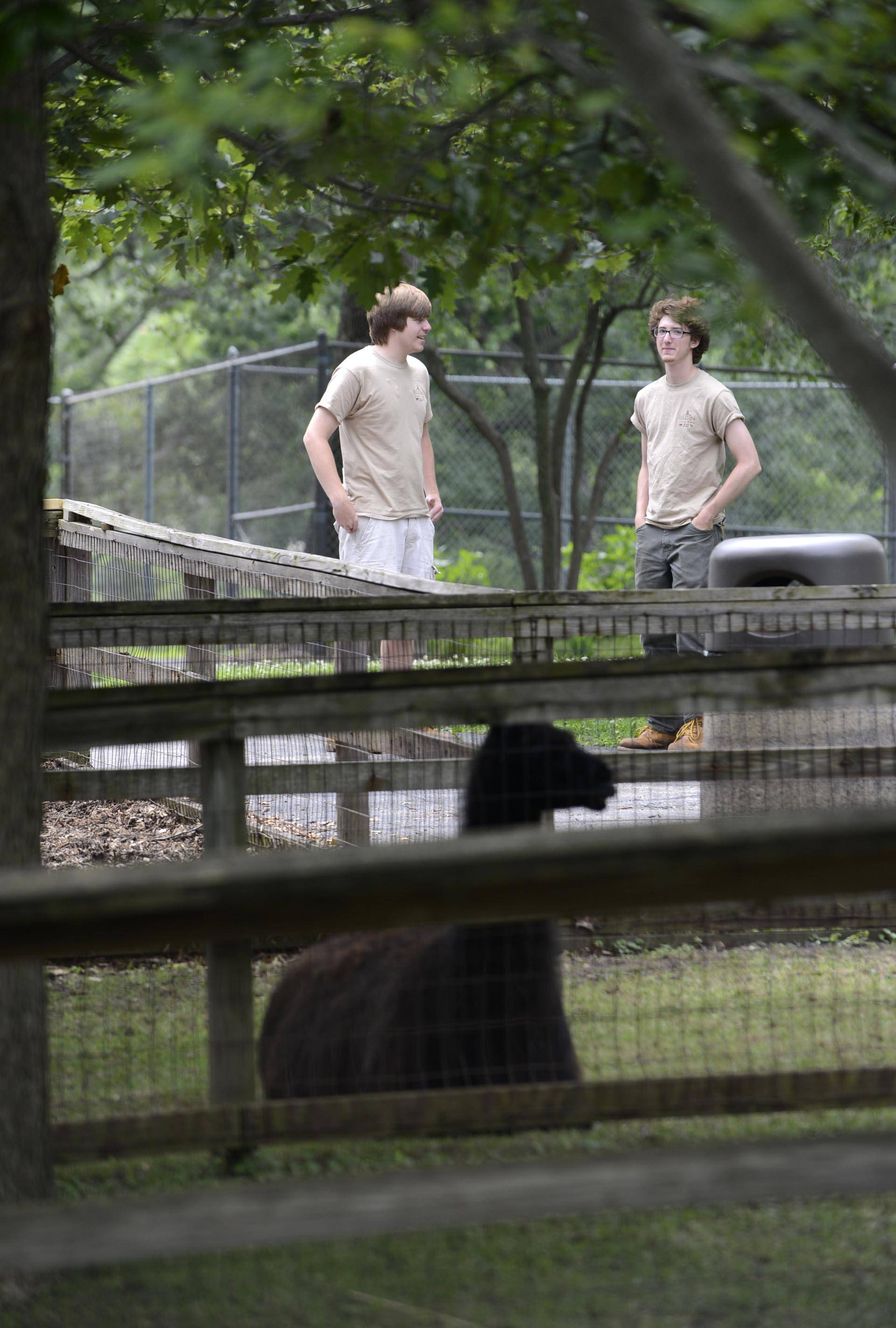 Nick Cetera and Jonah Schemn, both Elgin summer employees, watch the animals as visitors walk around the free Lords Park Farm Zoo. Cetera and Schemn prepare the grounds and animals for visitors each day.