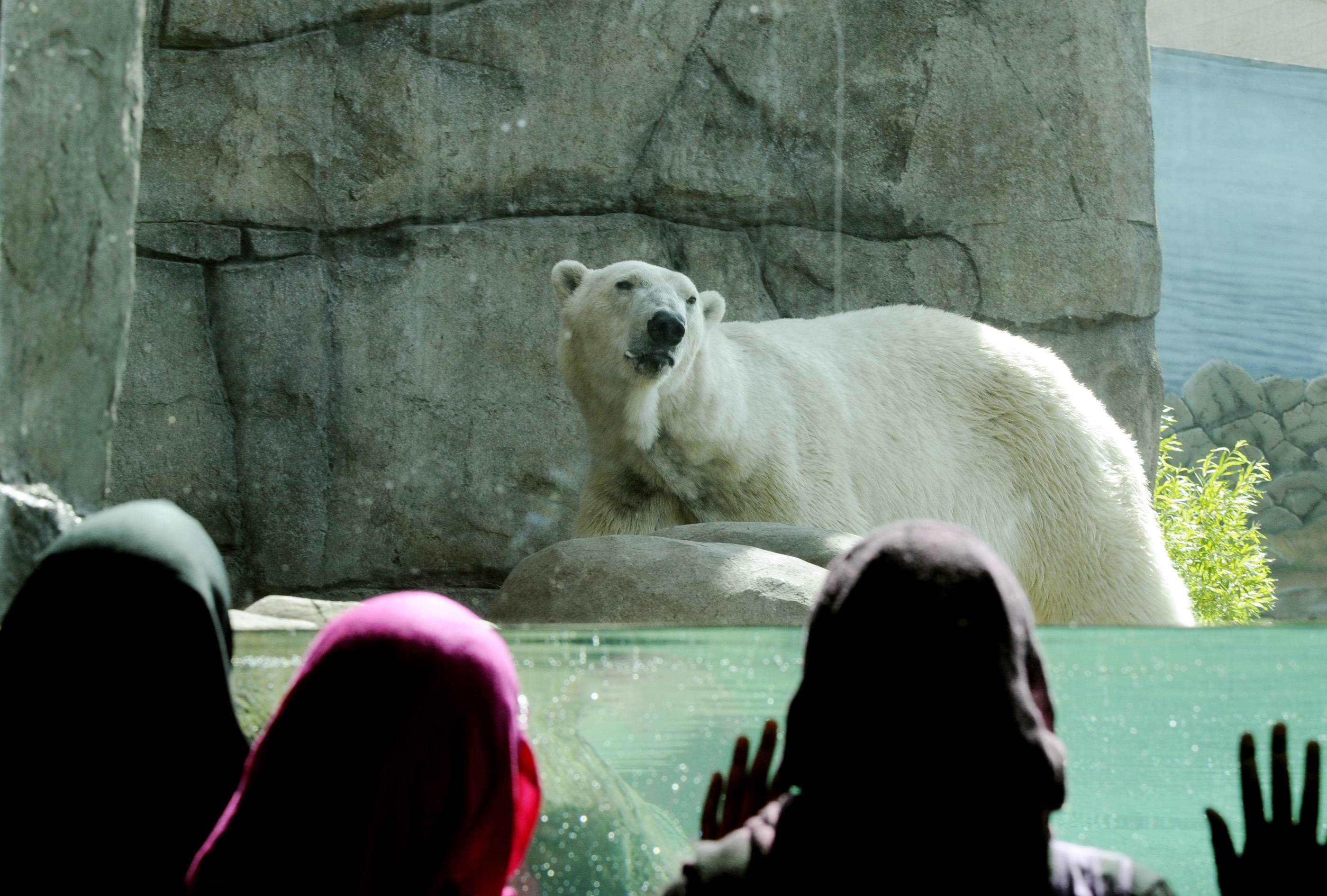 Young visitors watch one of the polar bears at the Polar Bear Odyssey exhibit at Como Zoo in St. Paul, Minn. St. Paul's Como Park Zoo is small enough to be kid-friendly, but big enough to hold lions and tigers and polar bears. Zoo keepers give daily free talks.