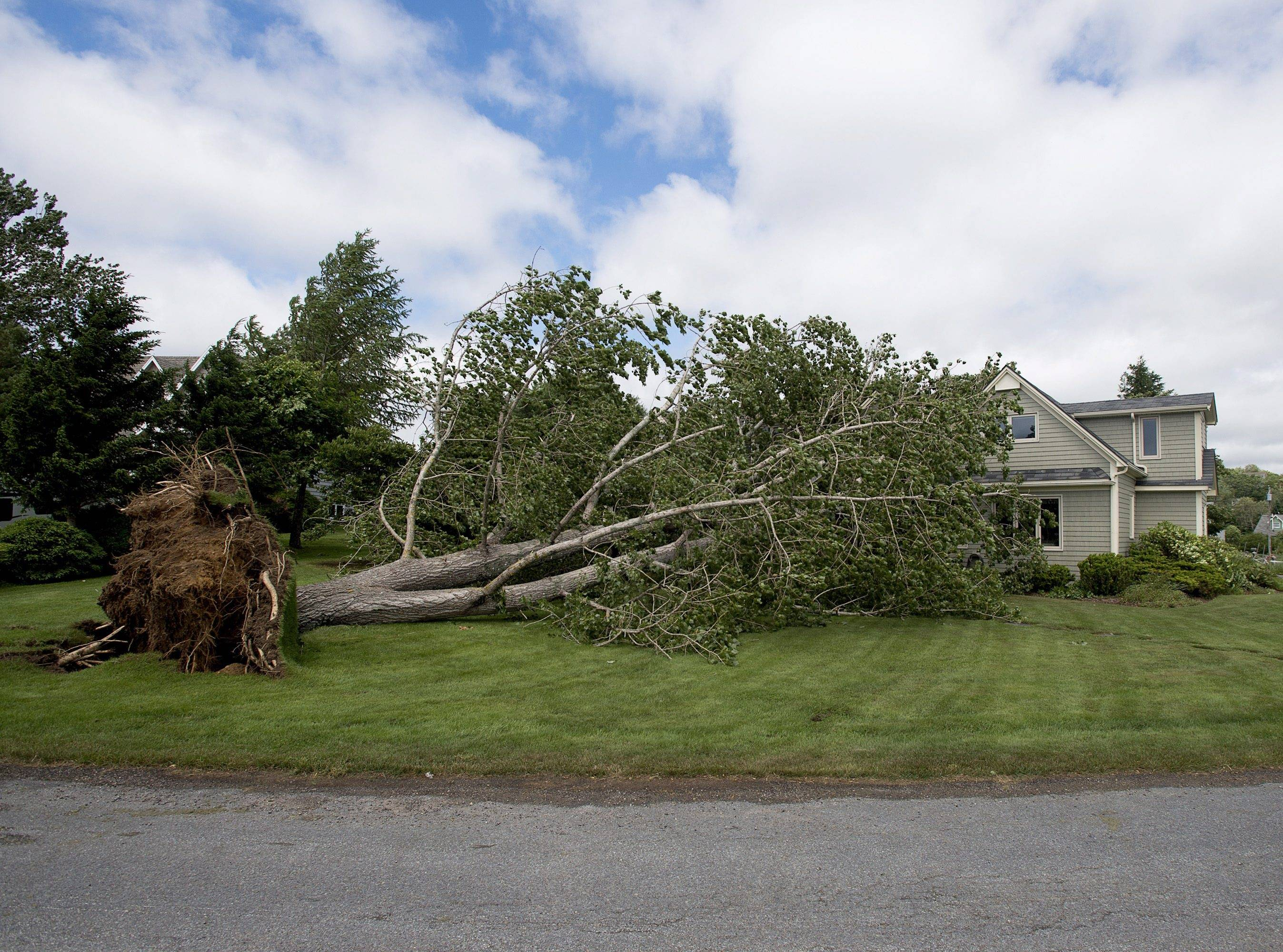 A large uprooted tree rests against a house in Oakland, Nova Scotia on Saturday. Thousands of homes and businesses were without power as heavy rains and high winds buffeted the region.