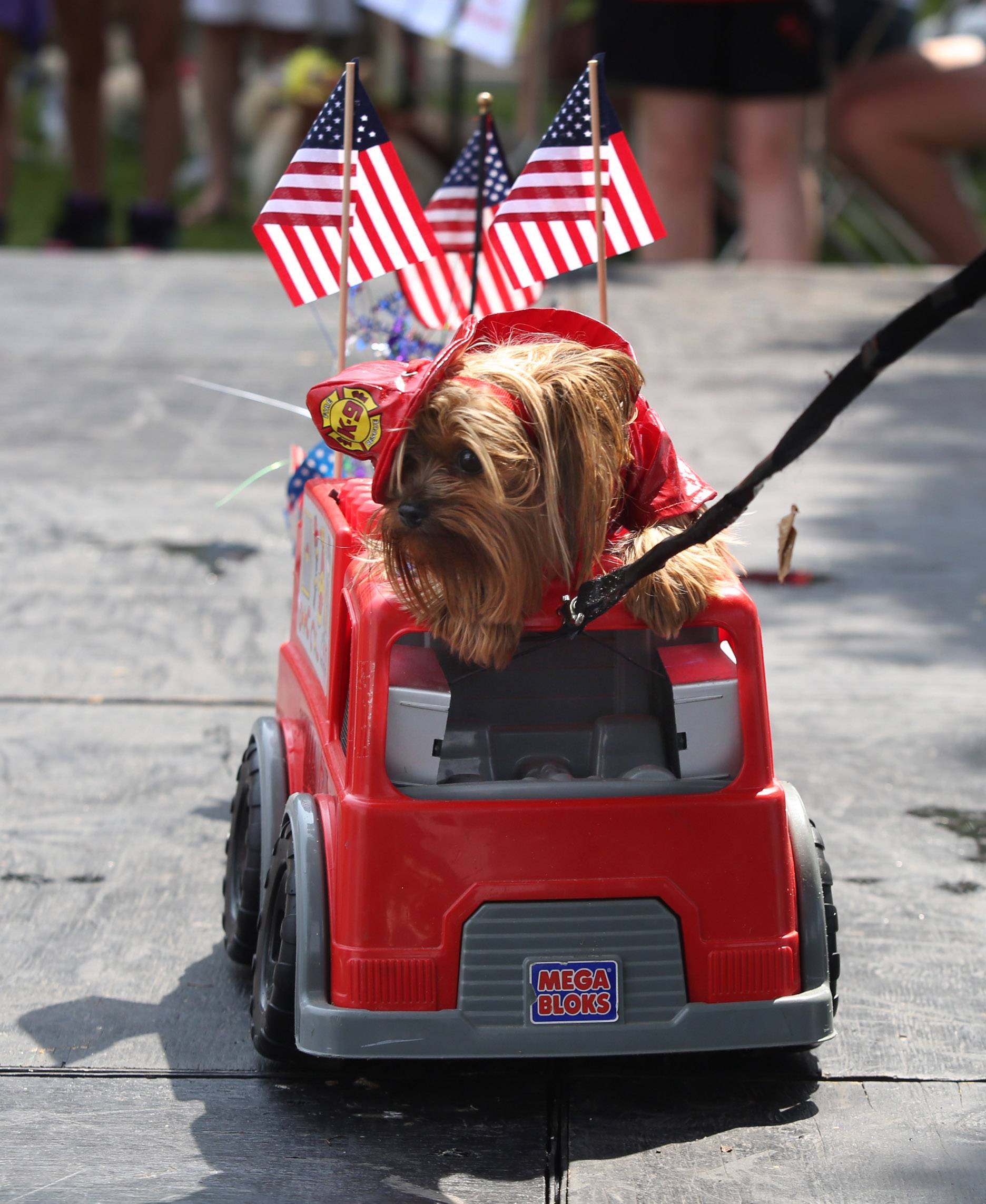 Yorkshire terrier Hairy Pawter, owned by Adrian and Denise Brigham of Streamwood, dressed as a firefighter Sunday for the pet parade at Arlington Heights' Frontier Days. Pets and their owners competed for best costume, best trick, cutest pet, most unusual and looks most like its owner awards during the event.