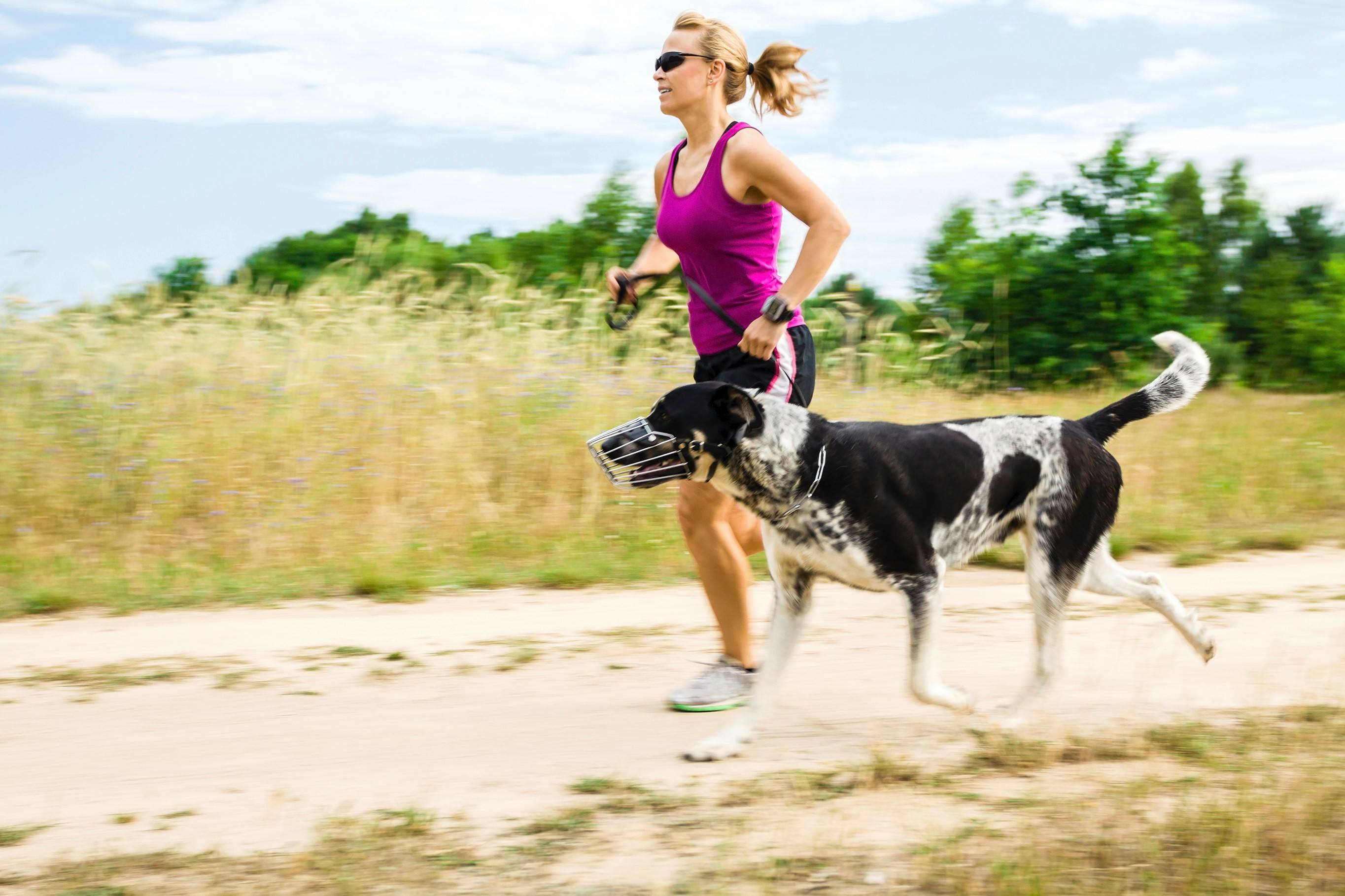 Some dogs can be great running companions, but some breeds are better left at home.