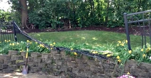 An oak tree fell Sunday in Carol Stream Mayor Frank Saverino's backyard. No one was injured, but a portion of his wrought-iron fence was bent and broken.