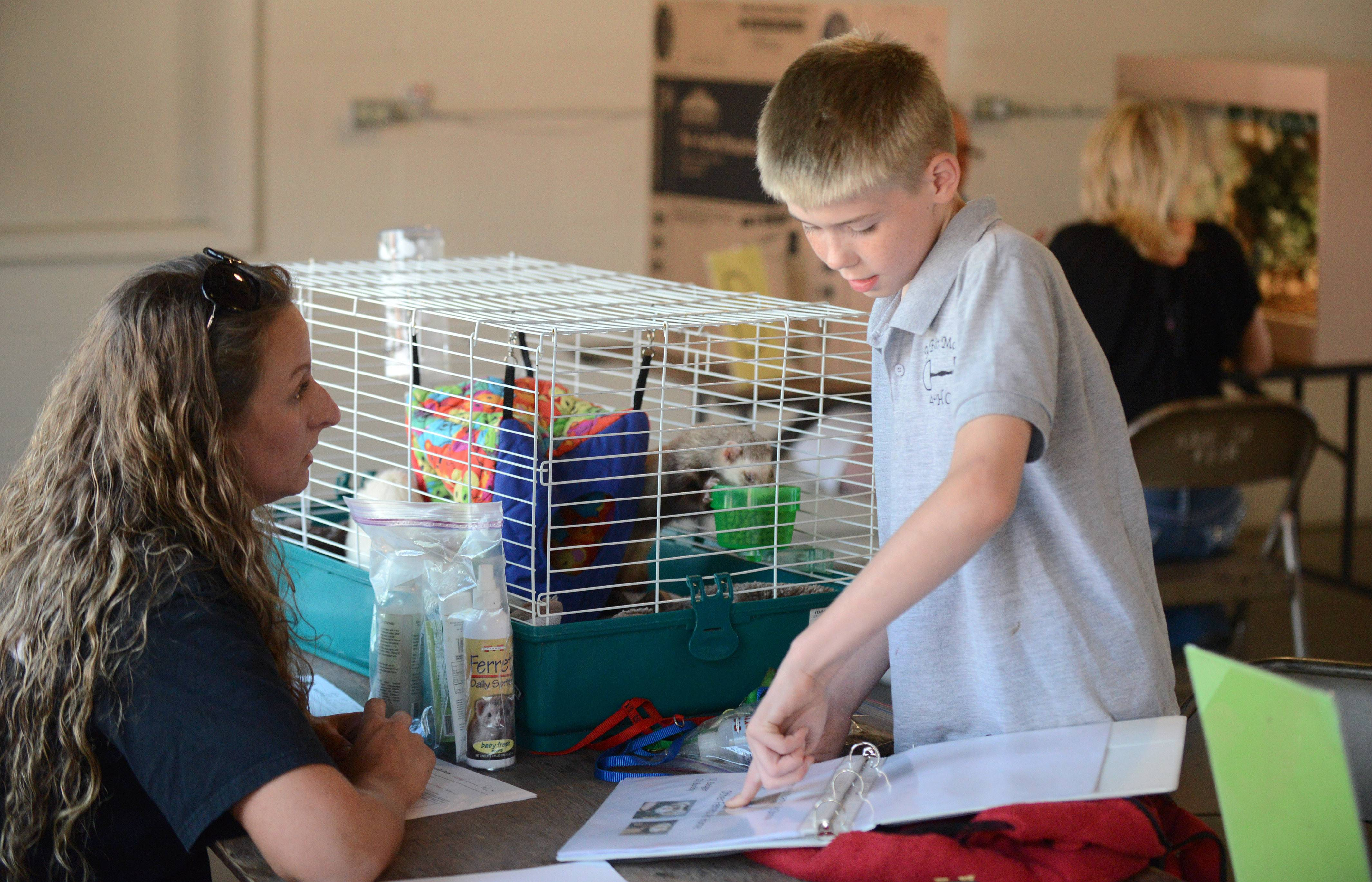 Zachary King, 10, of South Elgin presents two of his ferrets, Megatron and Mr. Dobbs, along with a detailed binder on ferret care to Kane County 4-H Small Pets show judge Ashley Kaminski, also of South Elgin, Tuesday at the Kane County Fairgrounds in St. Charles. Zachary is a member of the A Bit More 4-H Club out of Hampshire and won blue ribbons for his expertise on ferrets and their care in the competition.