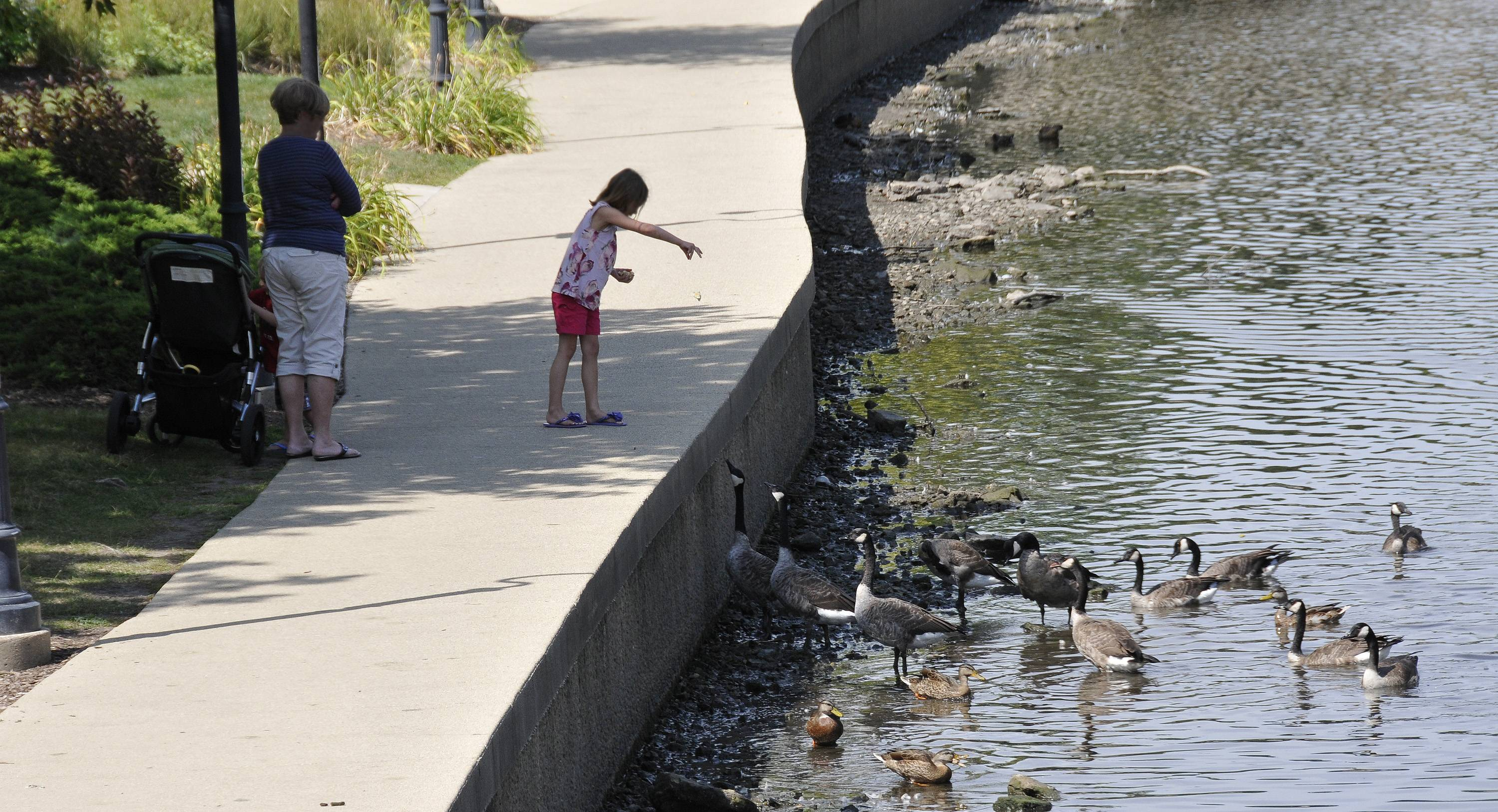 "Naperville Riverwalk stewards say many people either don't notice the signs stamped into the path saying ""DO NOT FEED WILDLIFE,"" or choose to ignore them. A volunteer group might soon be formed to educate the public about the reasons human food is not good for wild animals."