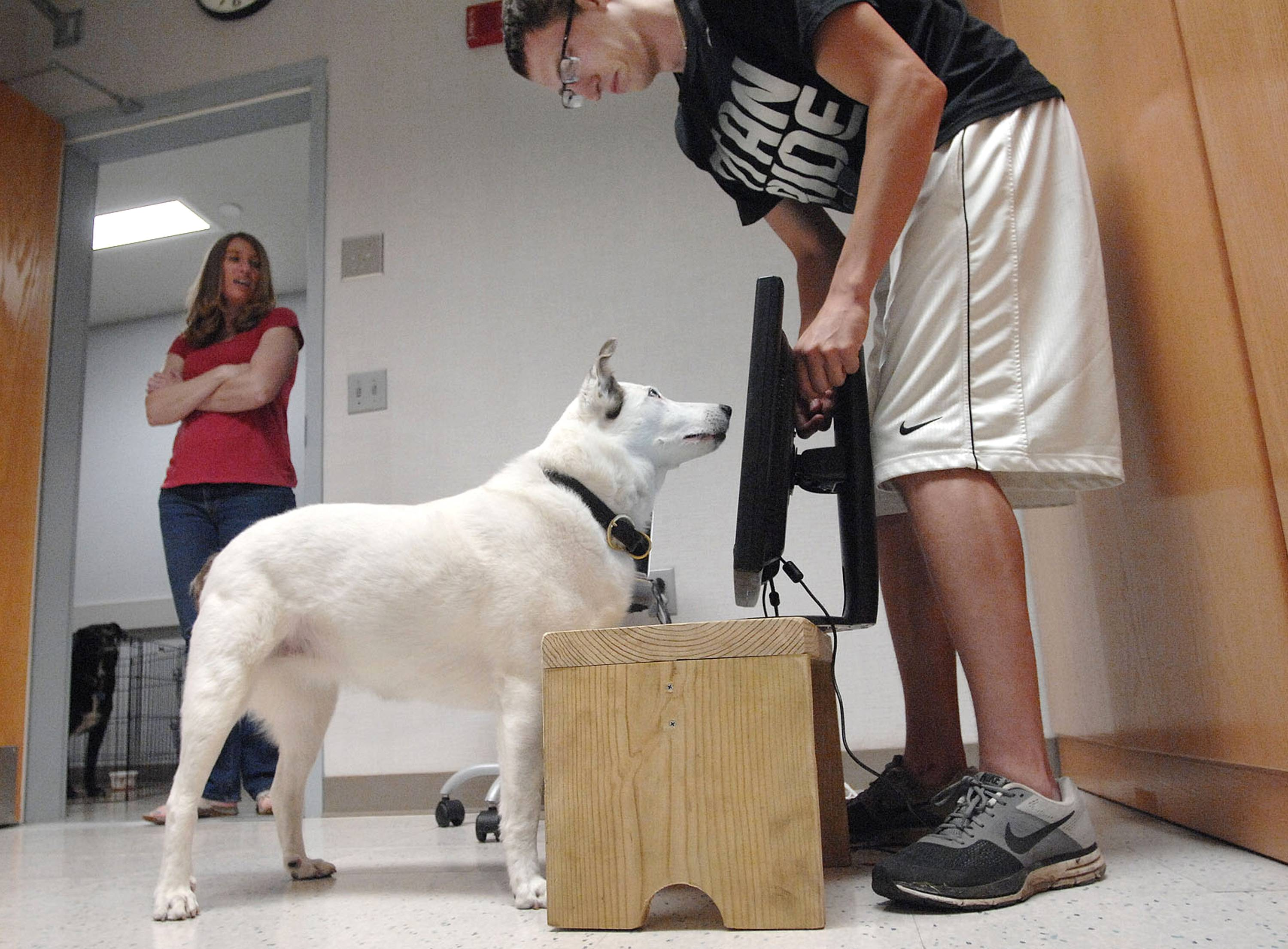 Ellen Furlong, left, Illinois Wesleyan University associate professor, works with psychology major Brenden Wall as he trains her dog Cleo to respond to computer stimulation during their work in the school's comparative cognition laboratory, at IWU in Bloomington.