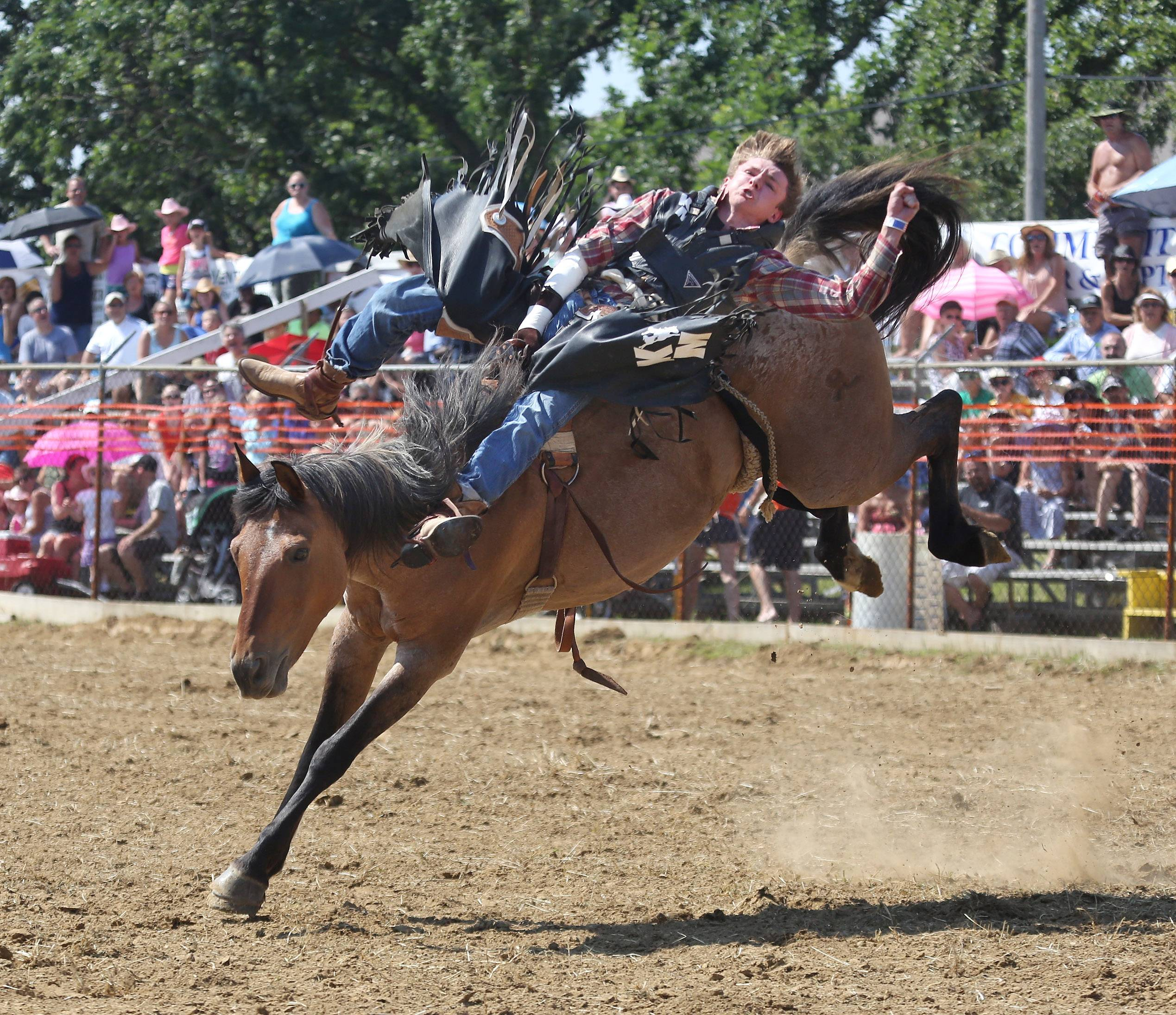 Mark Kreder, Jr. rides a bareback bronc during last year's IPRA Championship Wauconda Rodeo at Green Oaks Rodeo Grounds. The Wauconda Area Chamber of Commerce sponsored the event that featured a mechanical bull, pony rides and calf roping, as well as the rodeo show.
