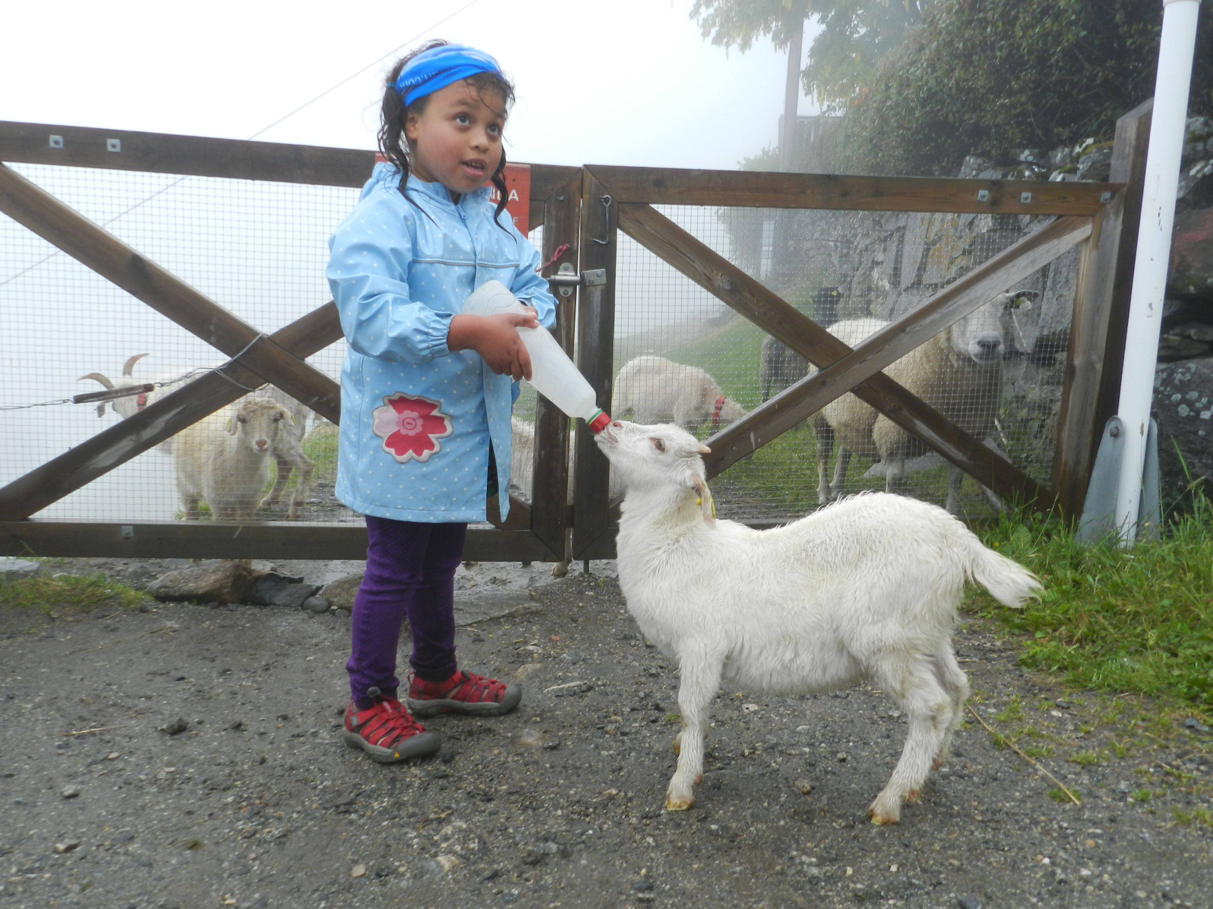 A hands-on visit to Westeras Farm in the village of Geiranger.