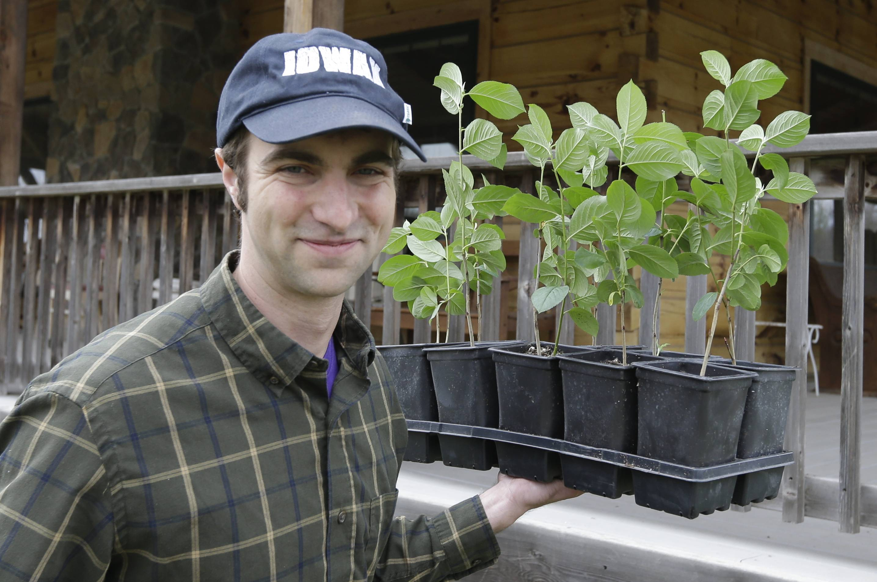 Andrew Pittz of the Sawmill Hollow aronia berry farm carries aronia berry seedlings in Missouri Valley, Iowa. A few years ago, few people had ever heard of the Aronia berry, a pretty, but tart fruit.